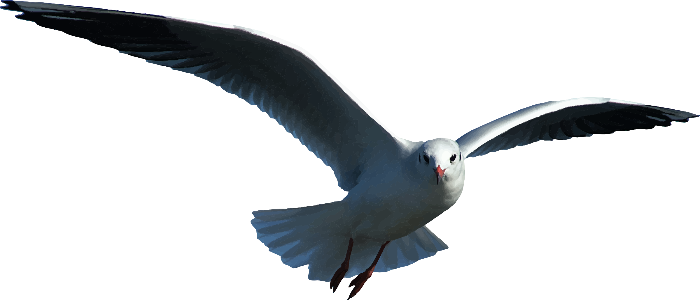 Seagull Flying Seagull Birds PNG Image and Clipart for