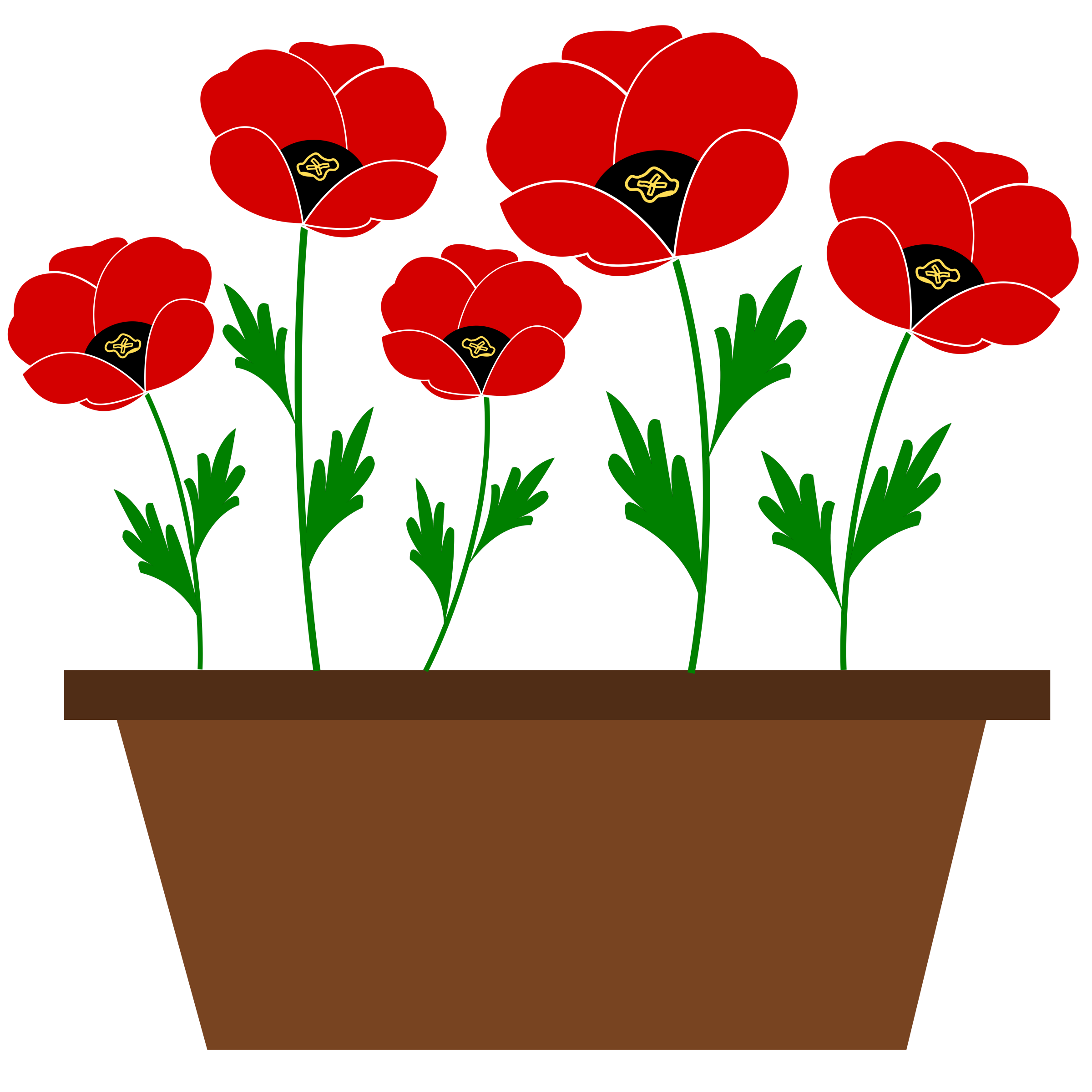 Poppies in a pot, just like that! by oldifluff