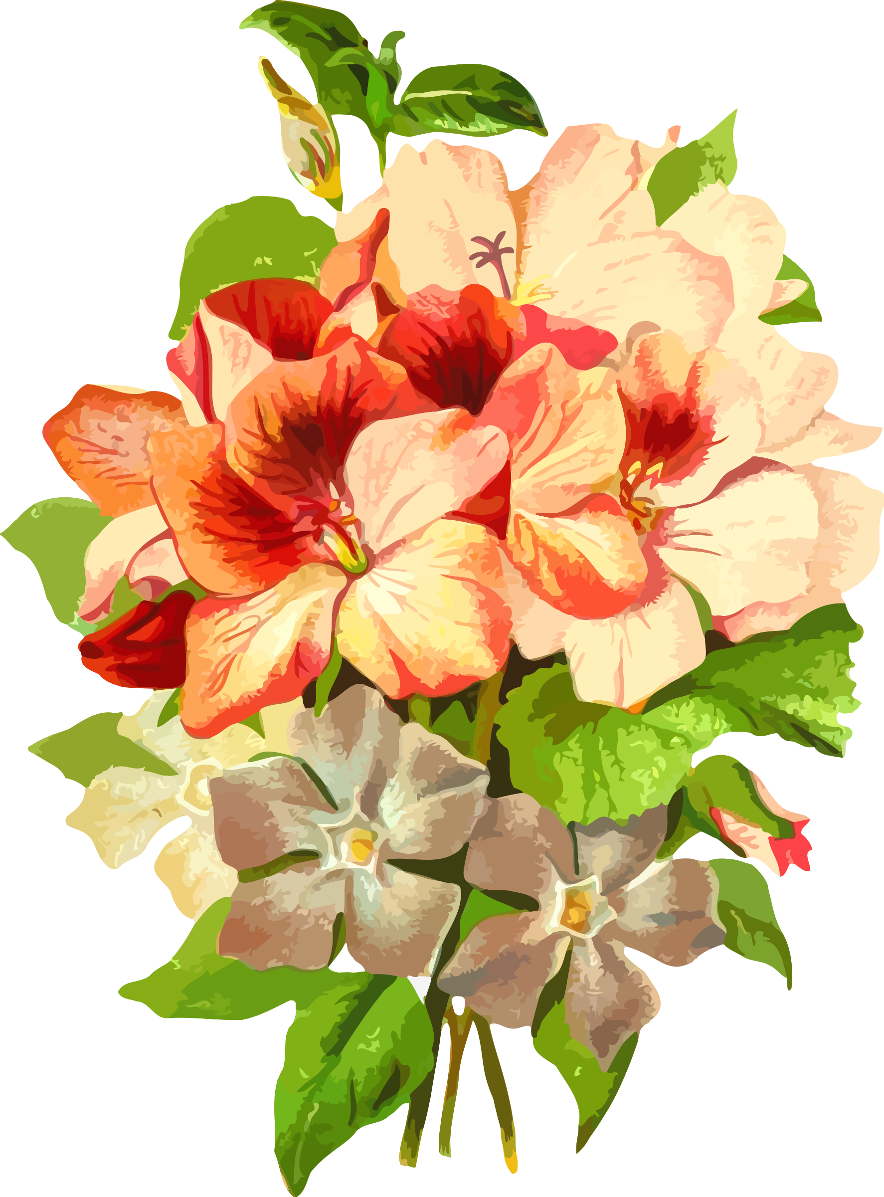 Pelargonium by Firkin