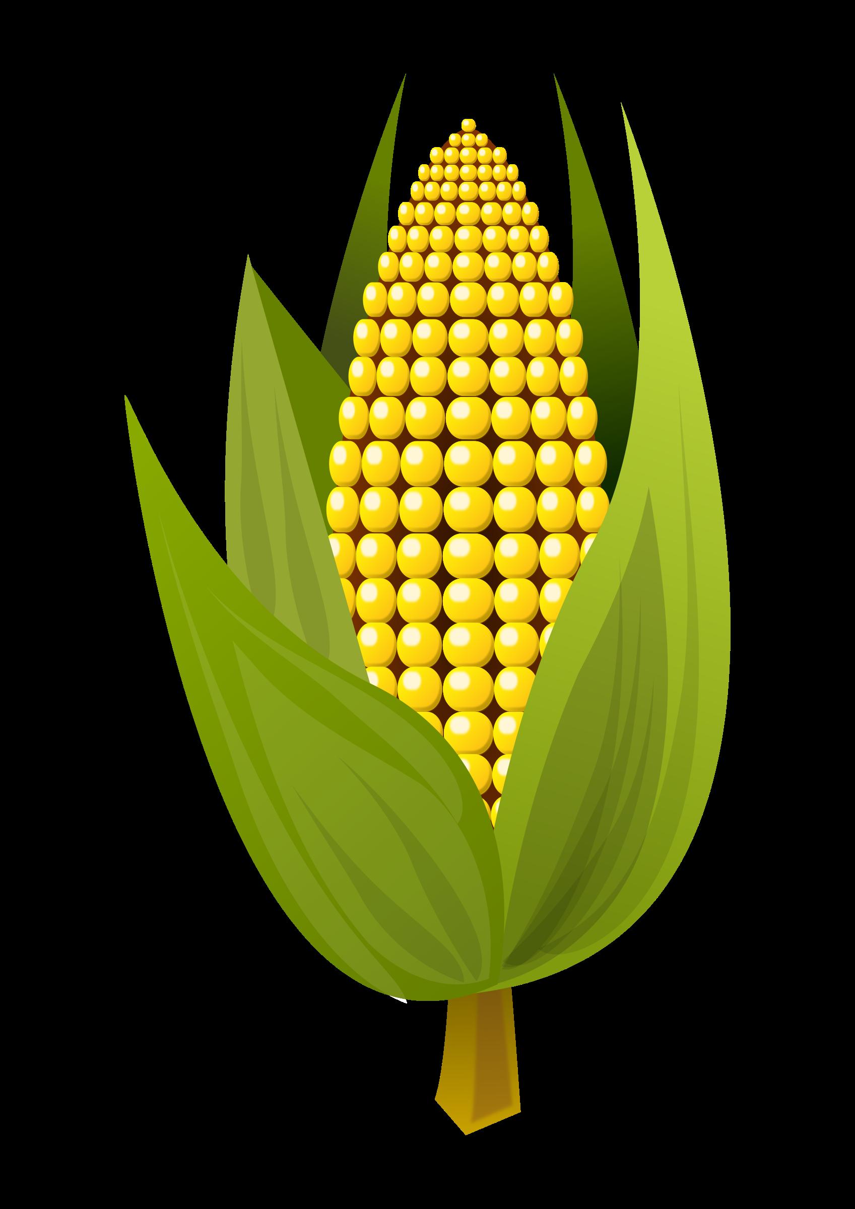 Corn by Almeidah