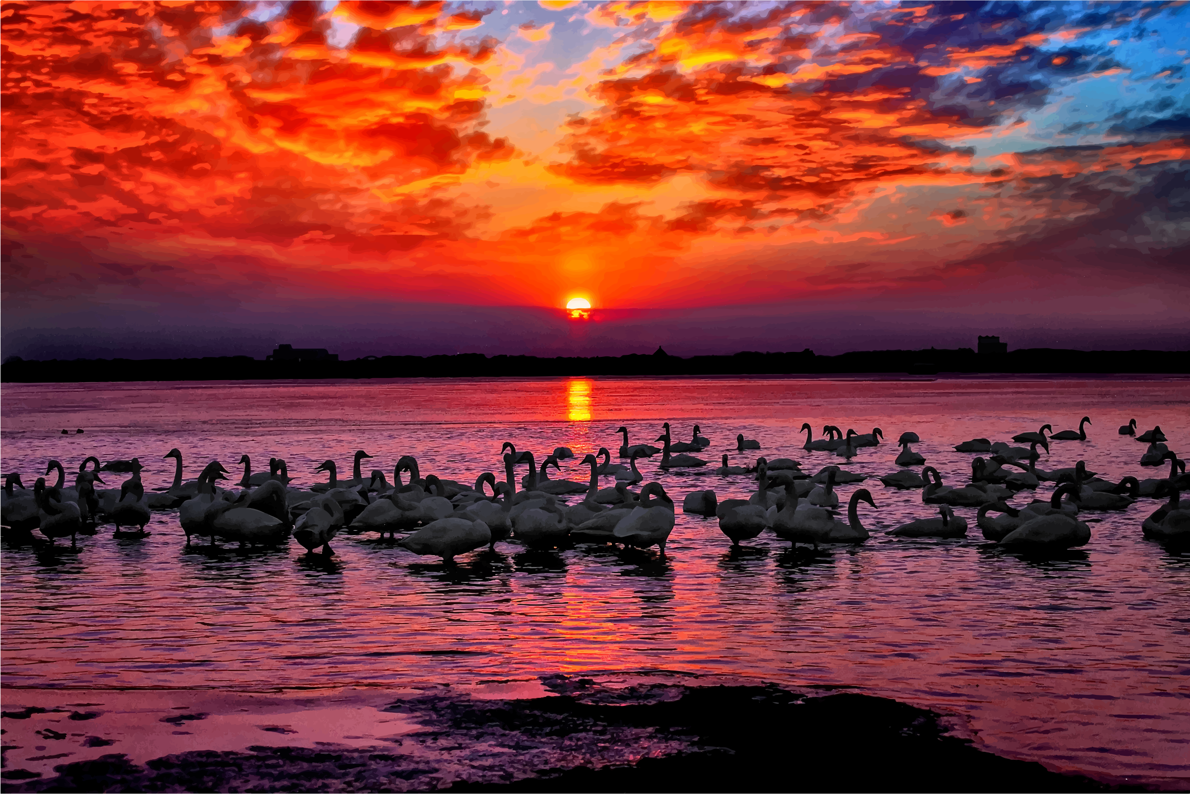 Swan Sunset by GDJ