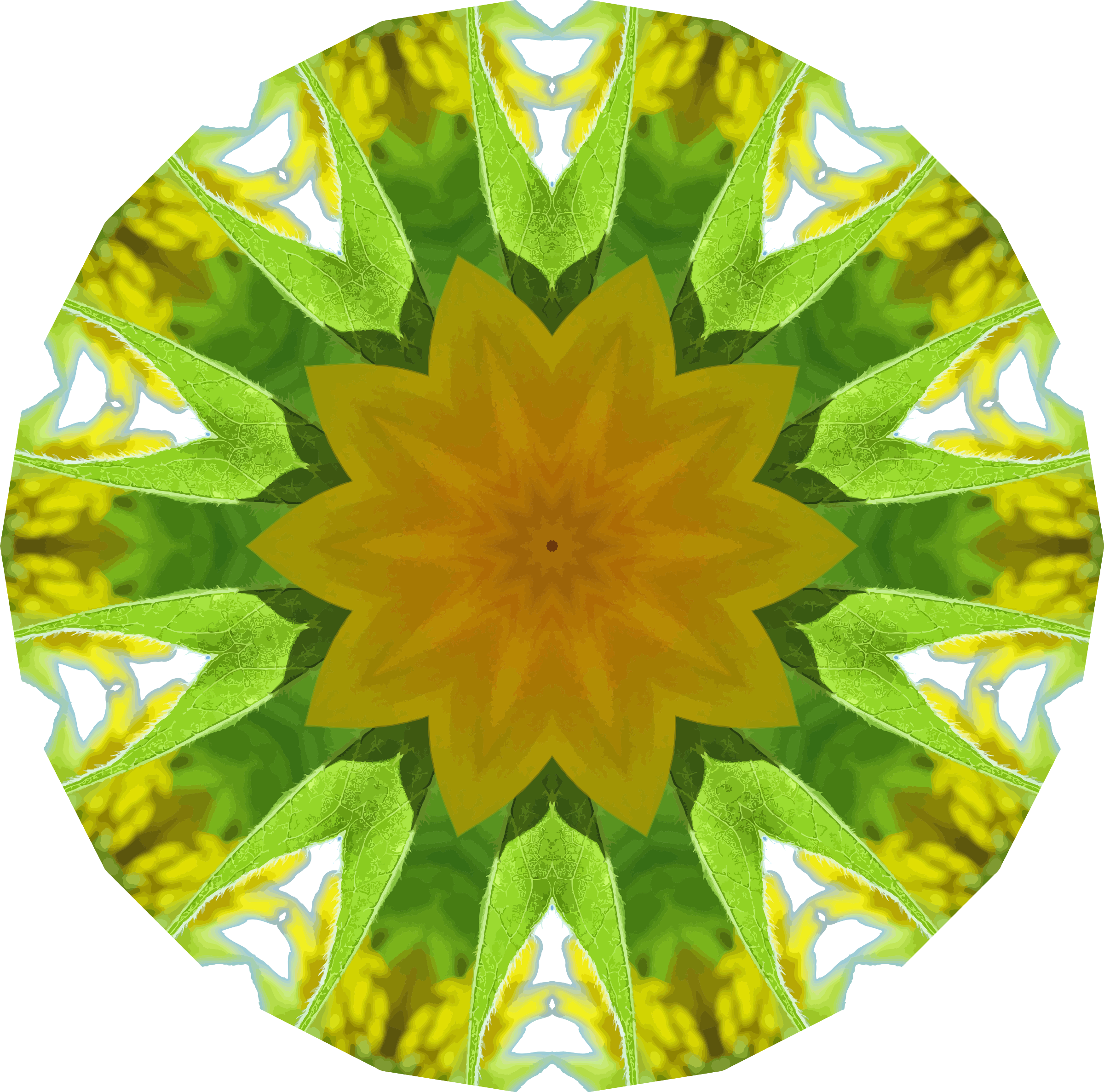 Sunflower kaleidoscope 11 by Firkin
