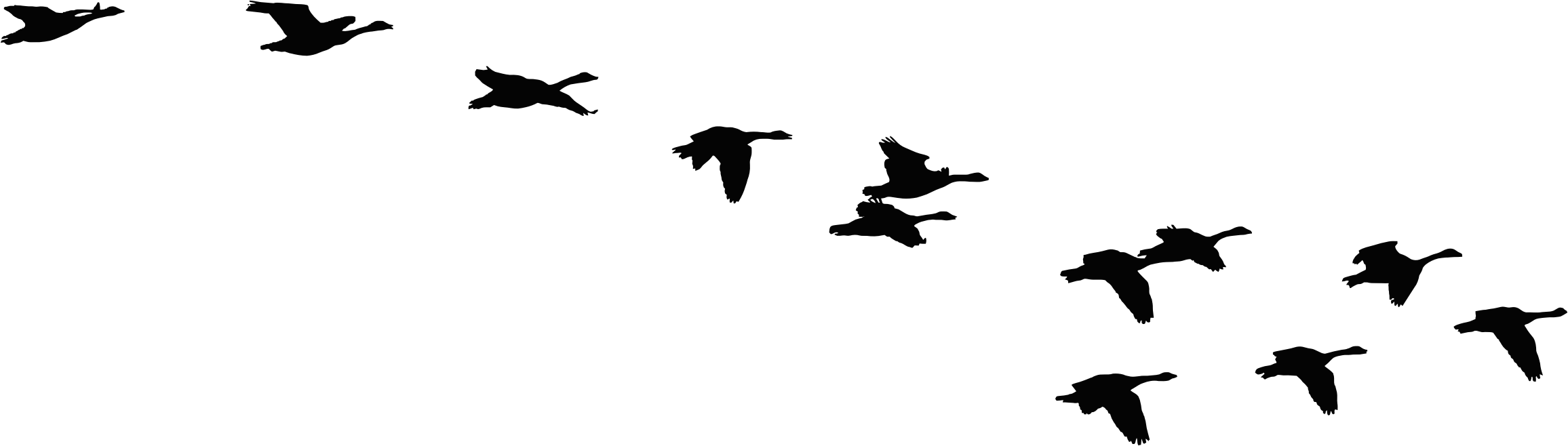 Flock of birds silhouette png - photo#19