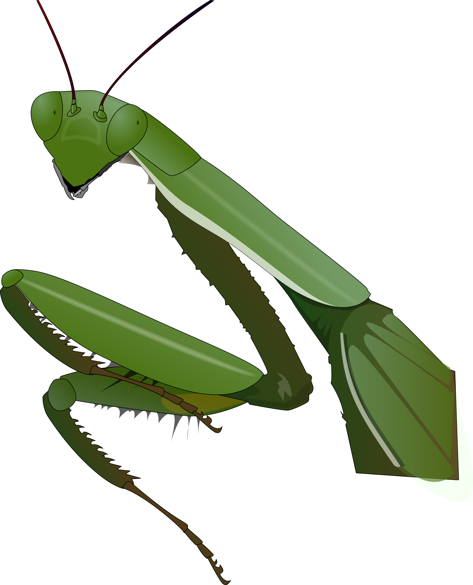Praying Mantis by Anonymous