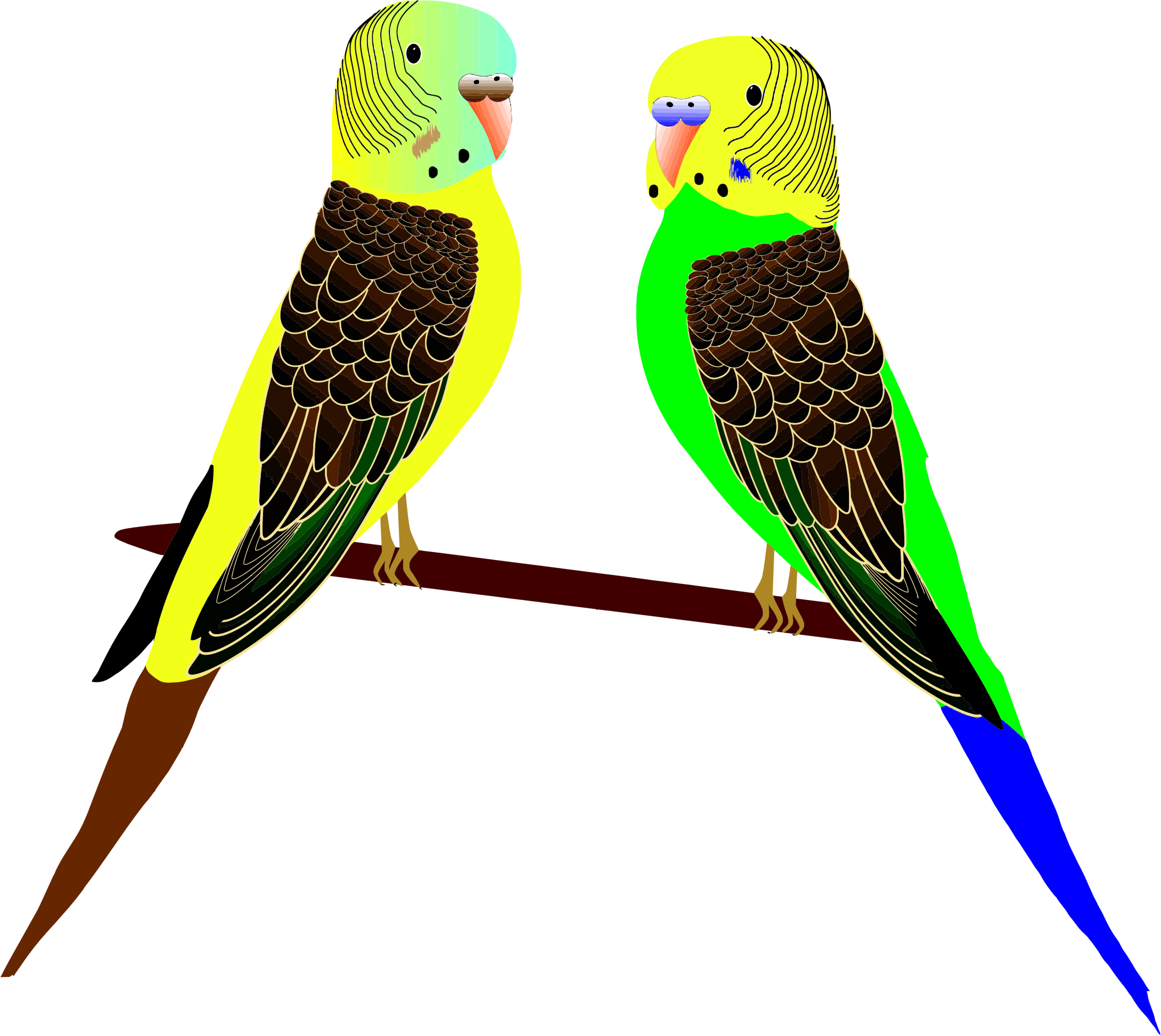 Parakeets Illustration by GDJ