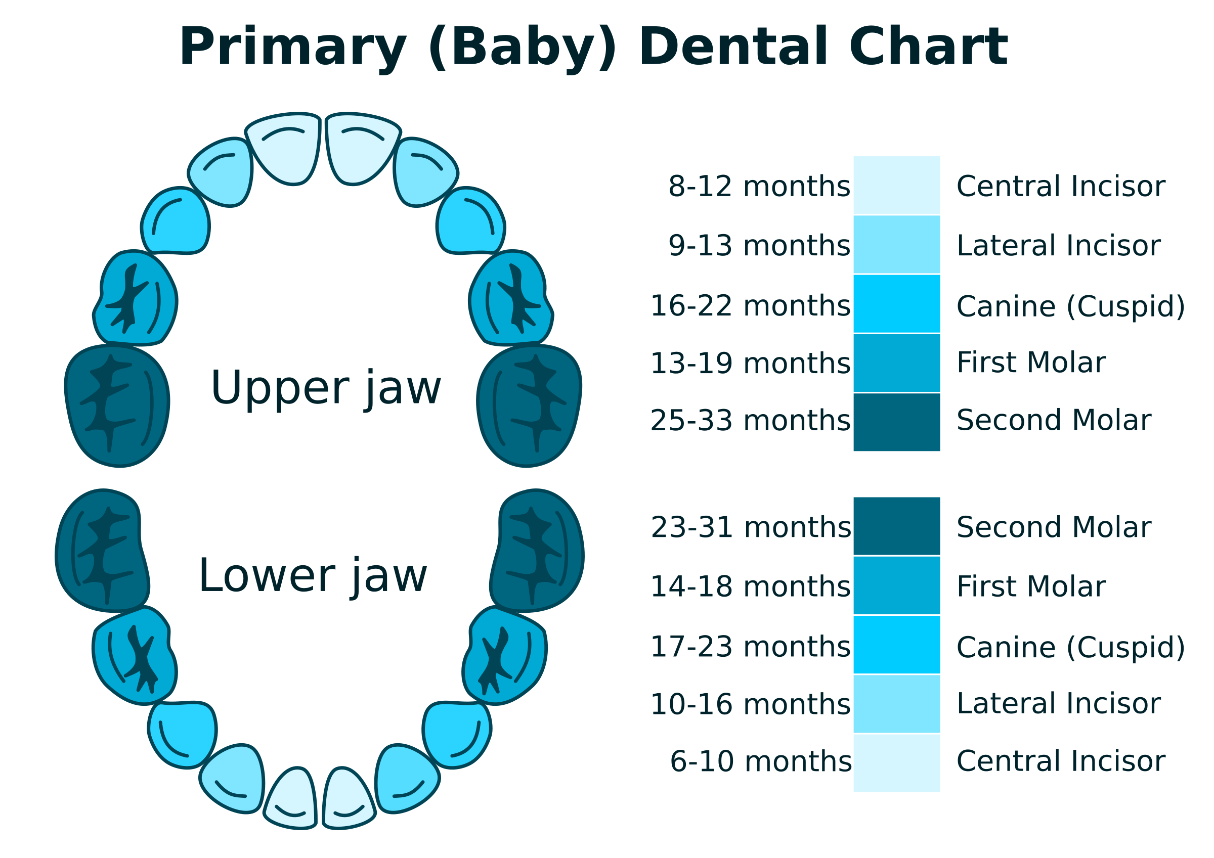 Primary Dental Chart by Susa
