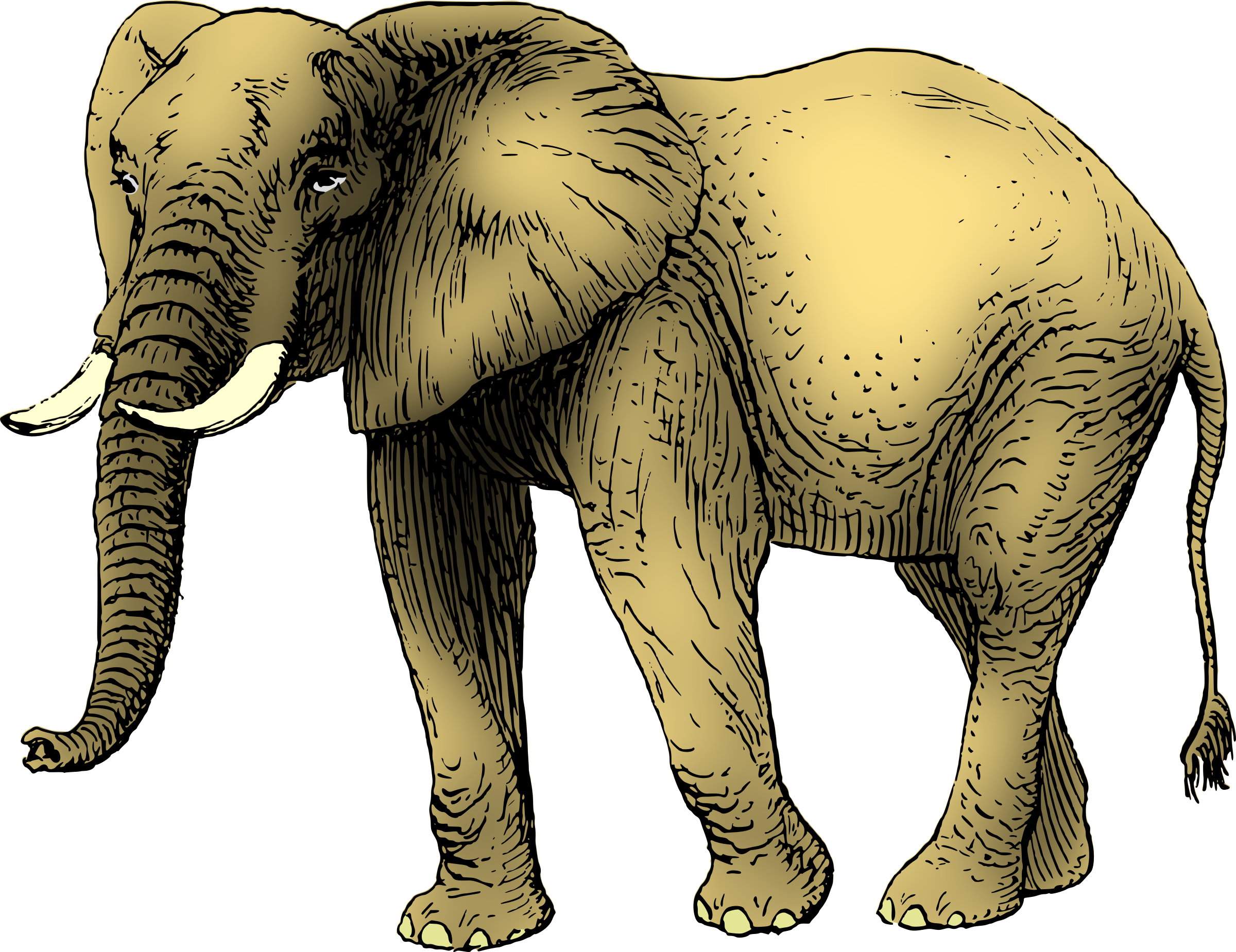 Elephant 9 (coloured) by Firkin