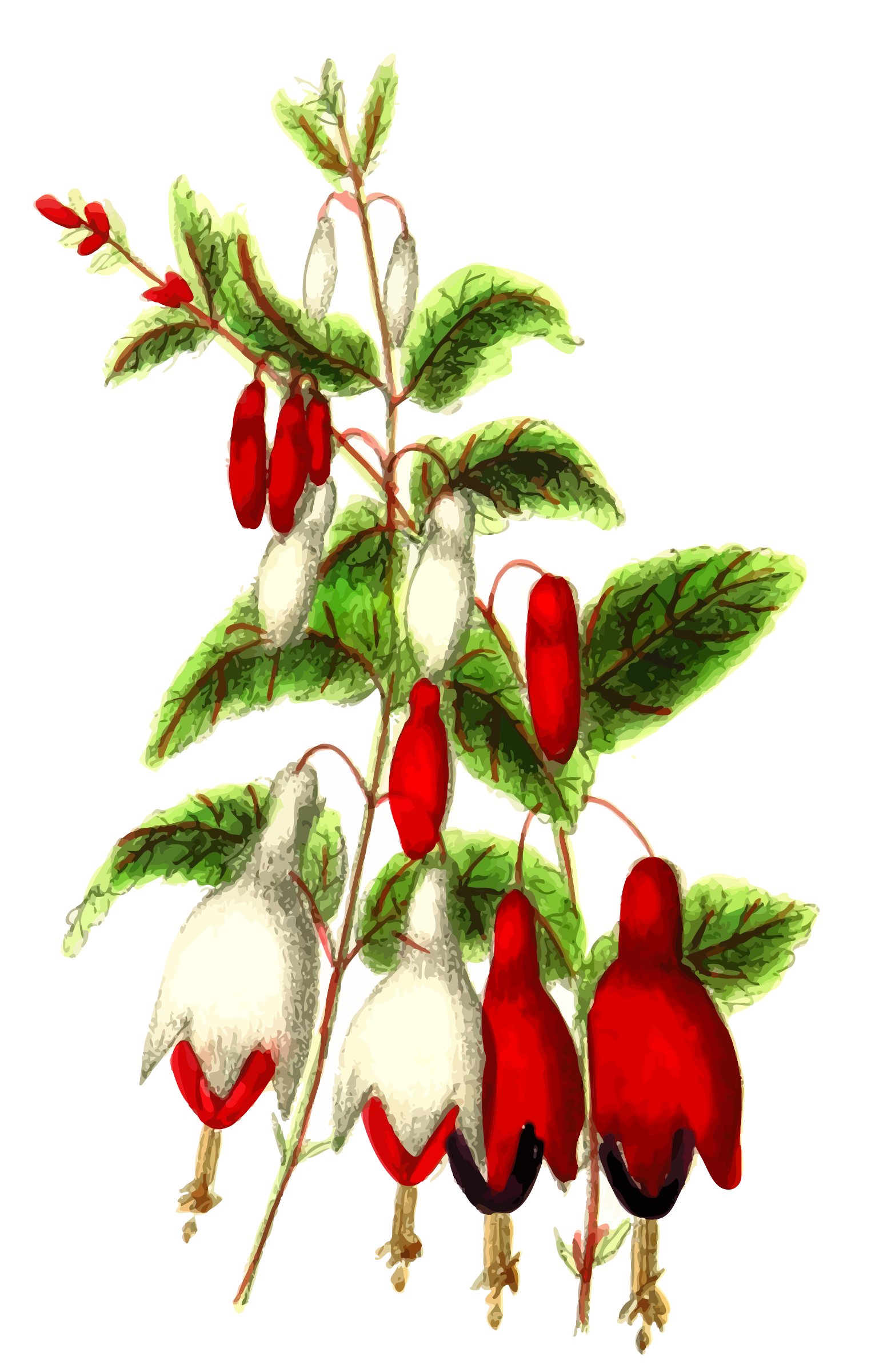 Fuchsia by Firkin