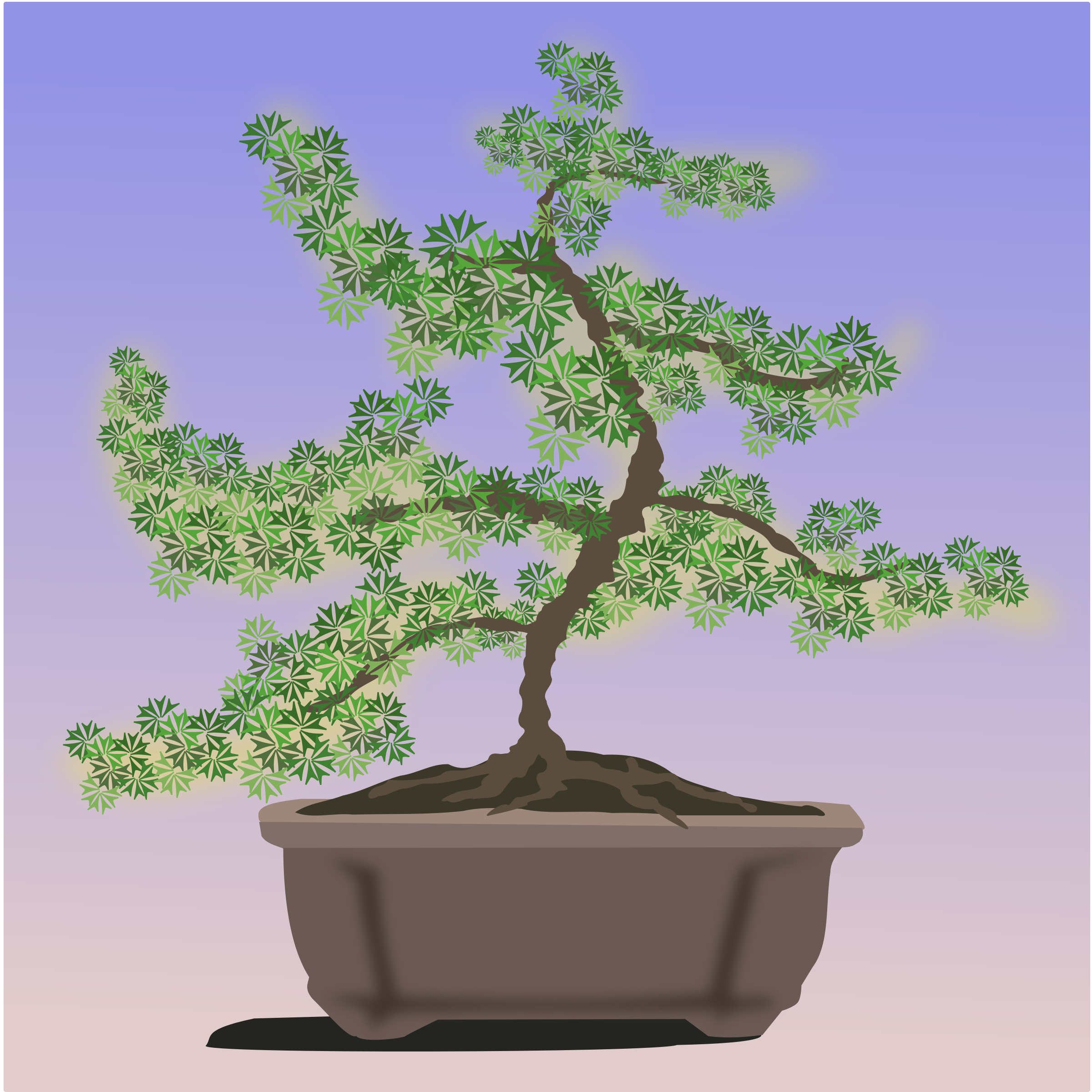 bonsai-08 by jpenrici