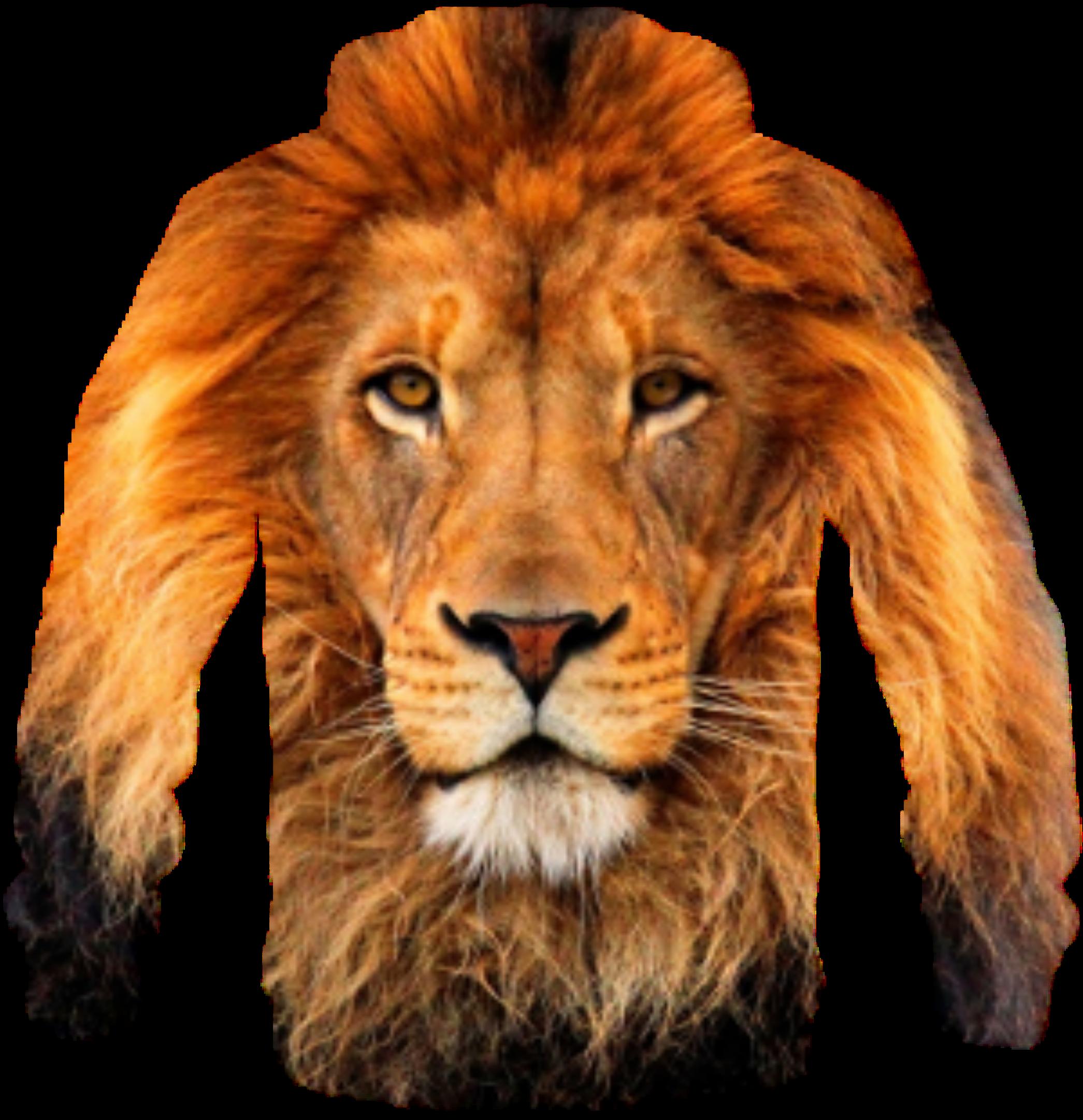 clipart t shirt lion