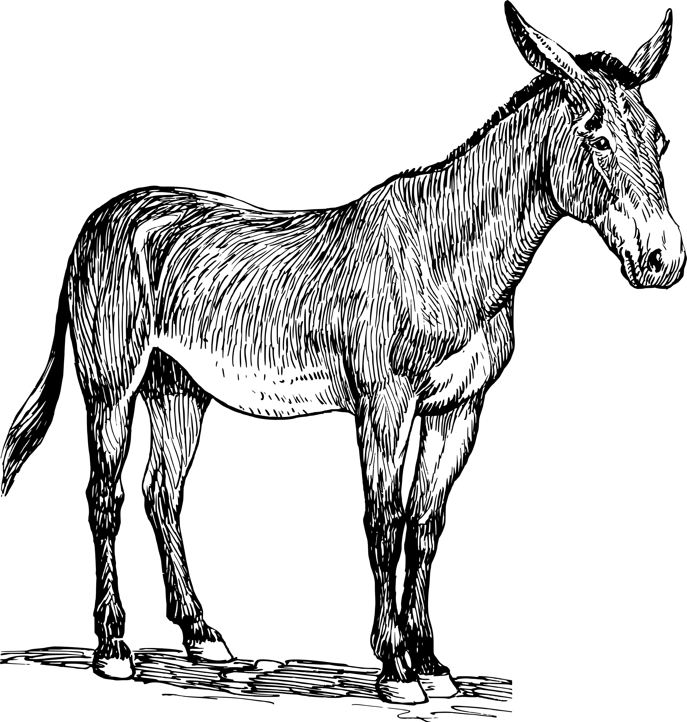 Clipart - Mule