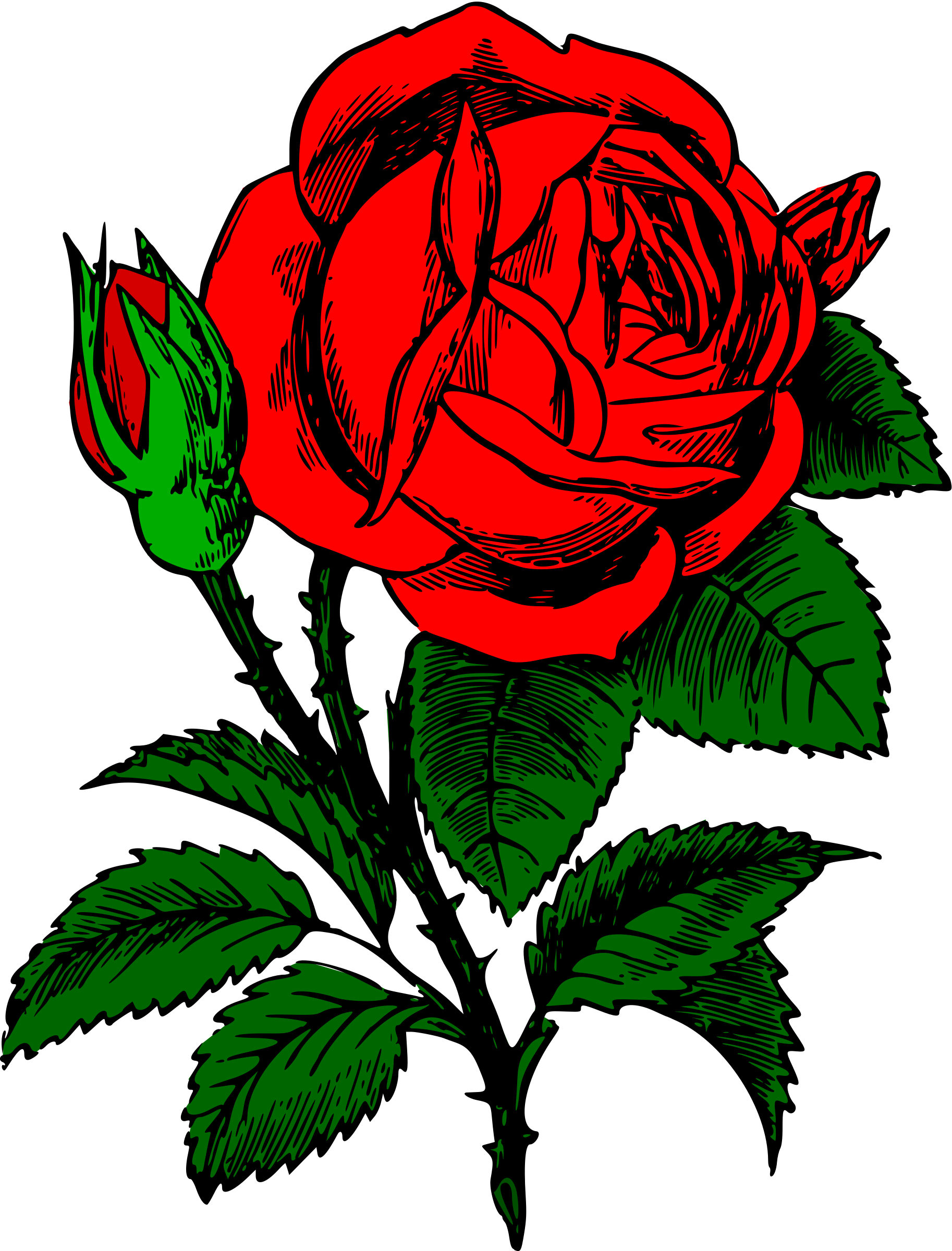 Red rose by liftarn