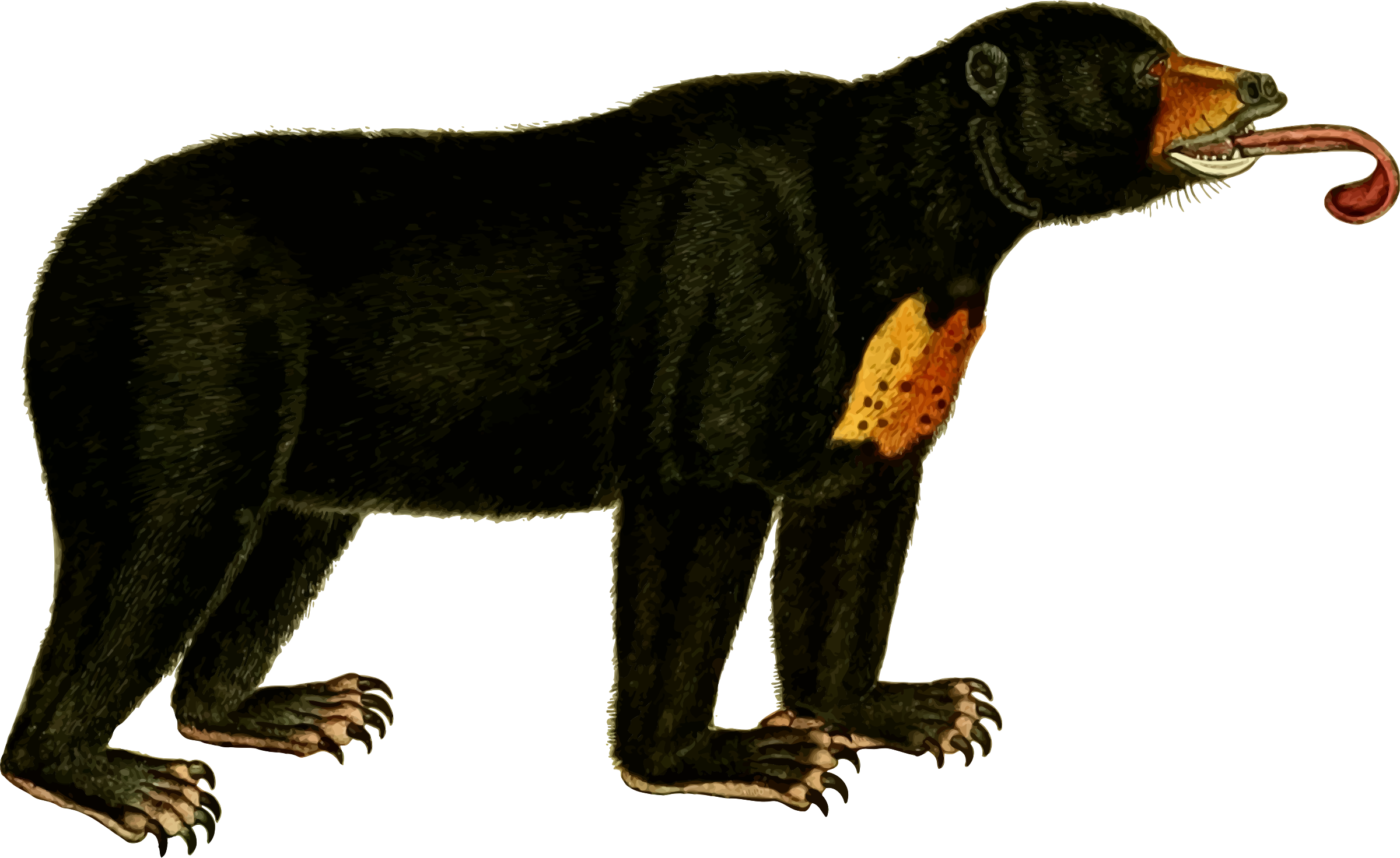 Bear 2 (isolated) by Firkin