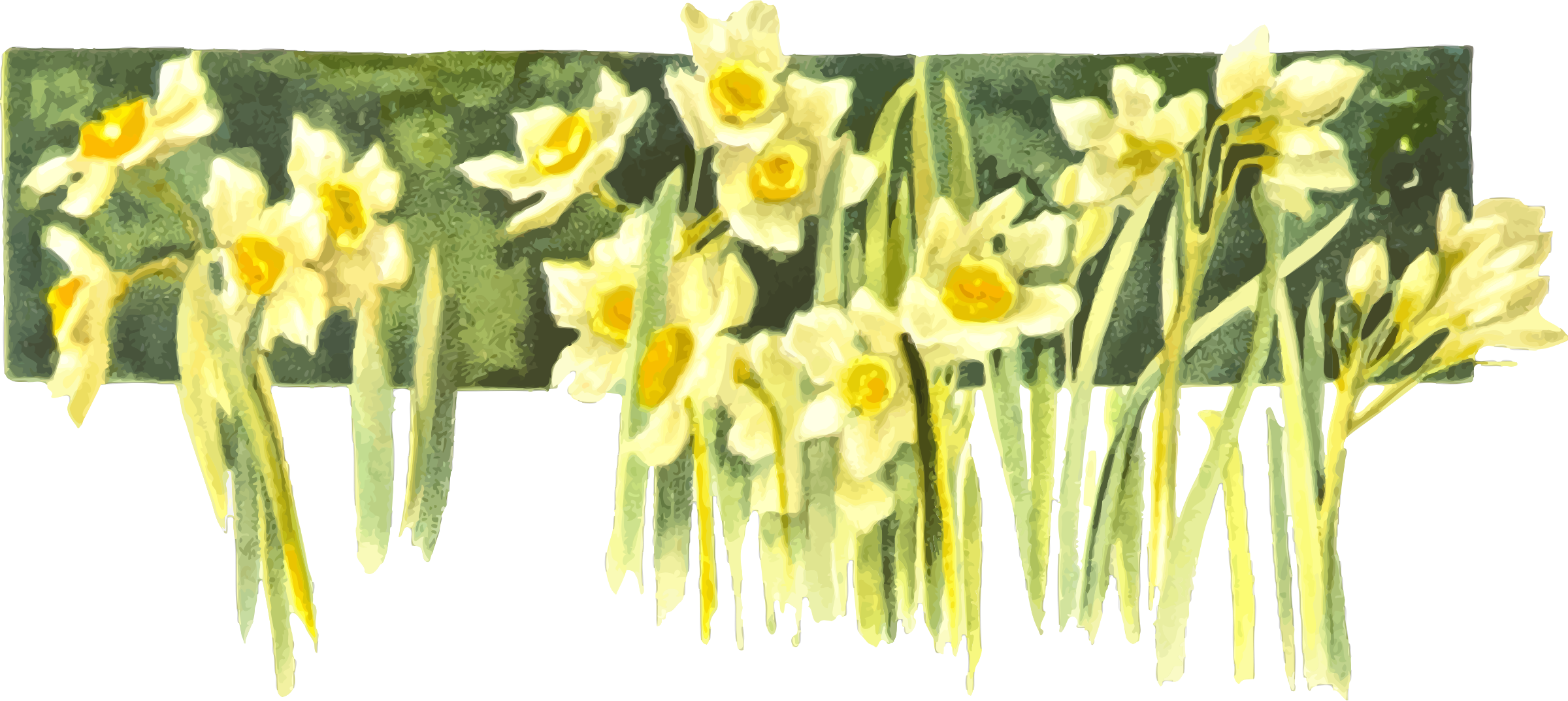 Narcissi by Firkin