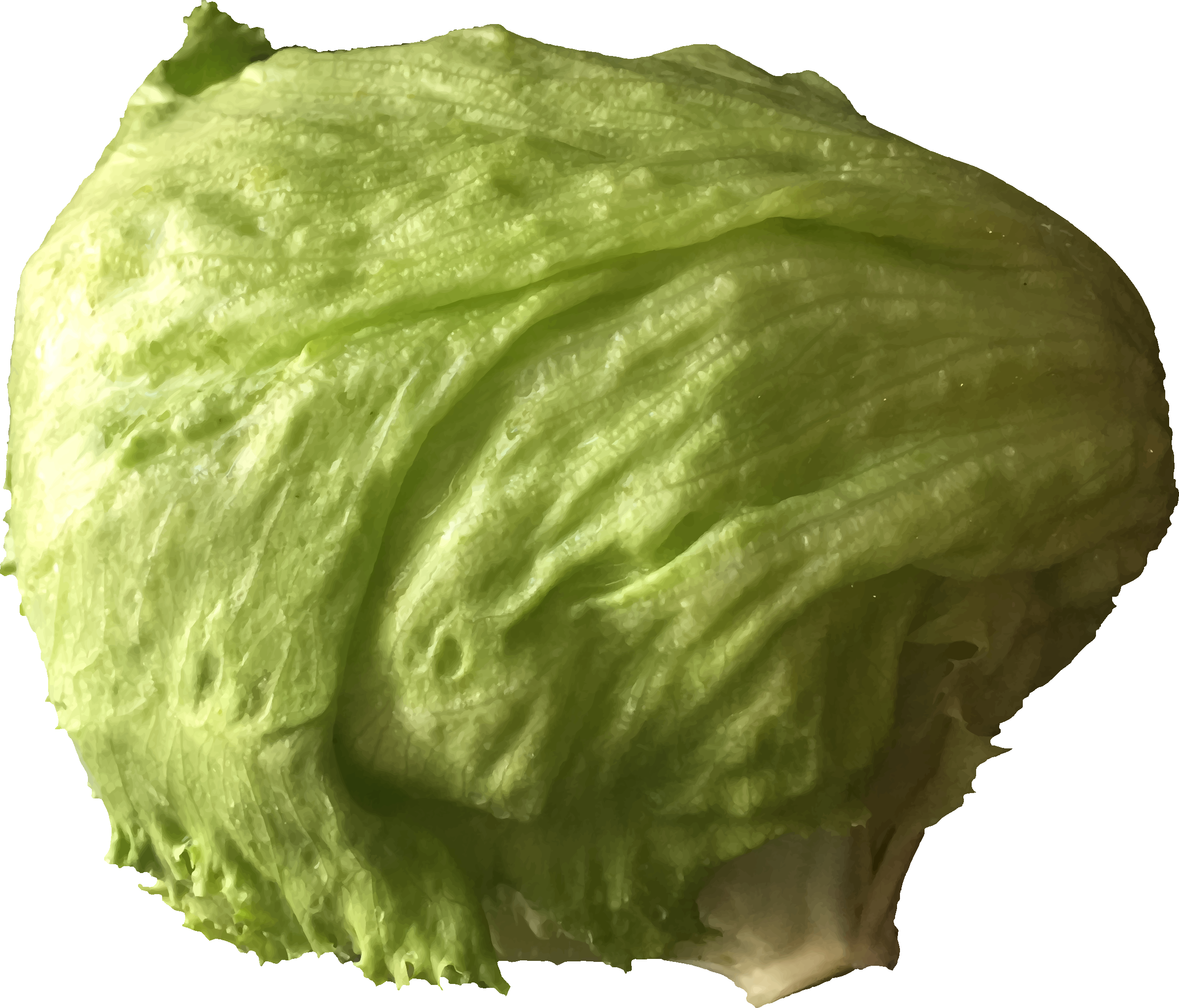 Lettuce by Firkin