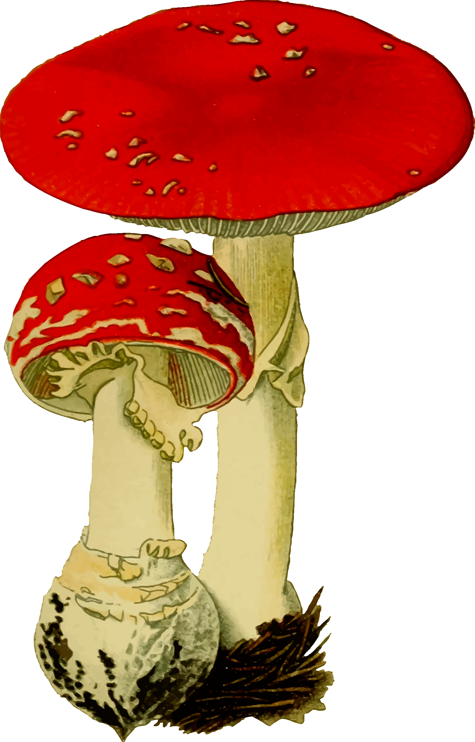 Fly agaric by Firkin