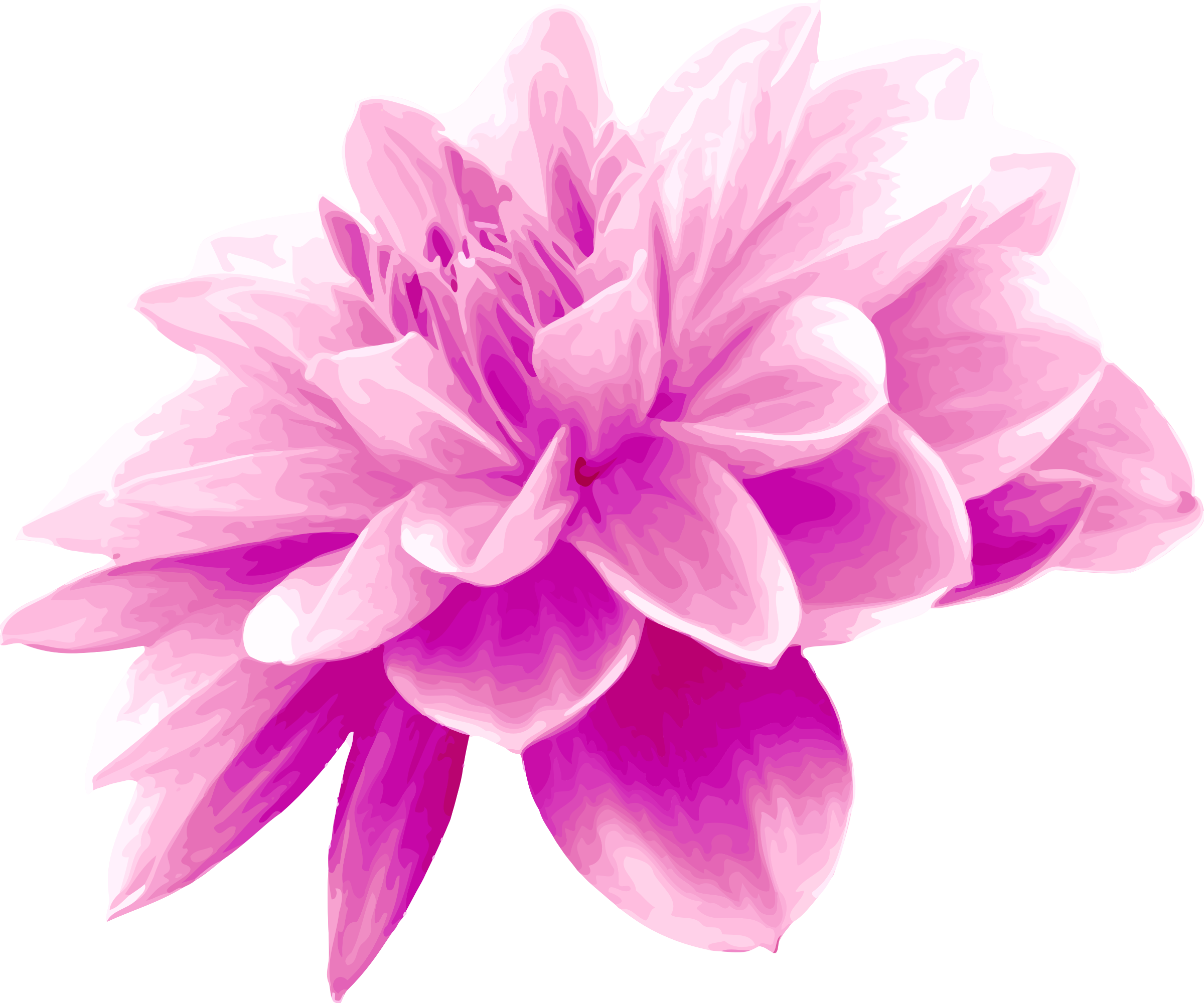 Pink flower by Firkin