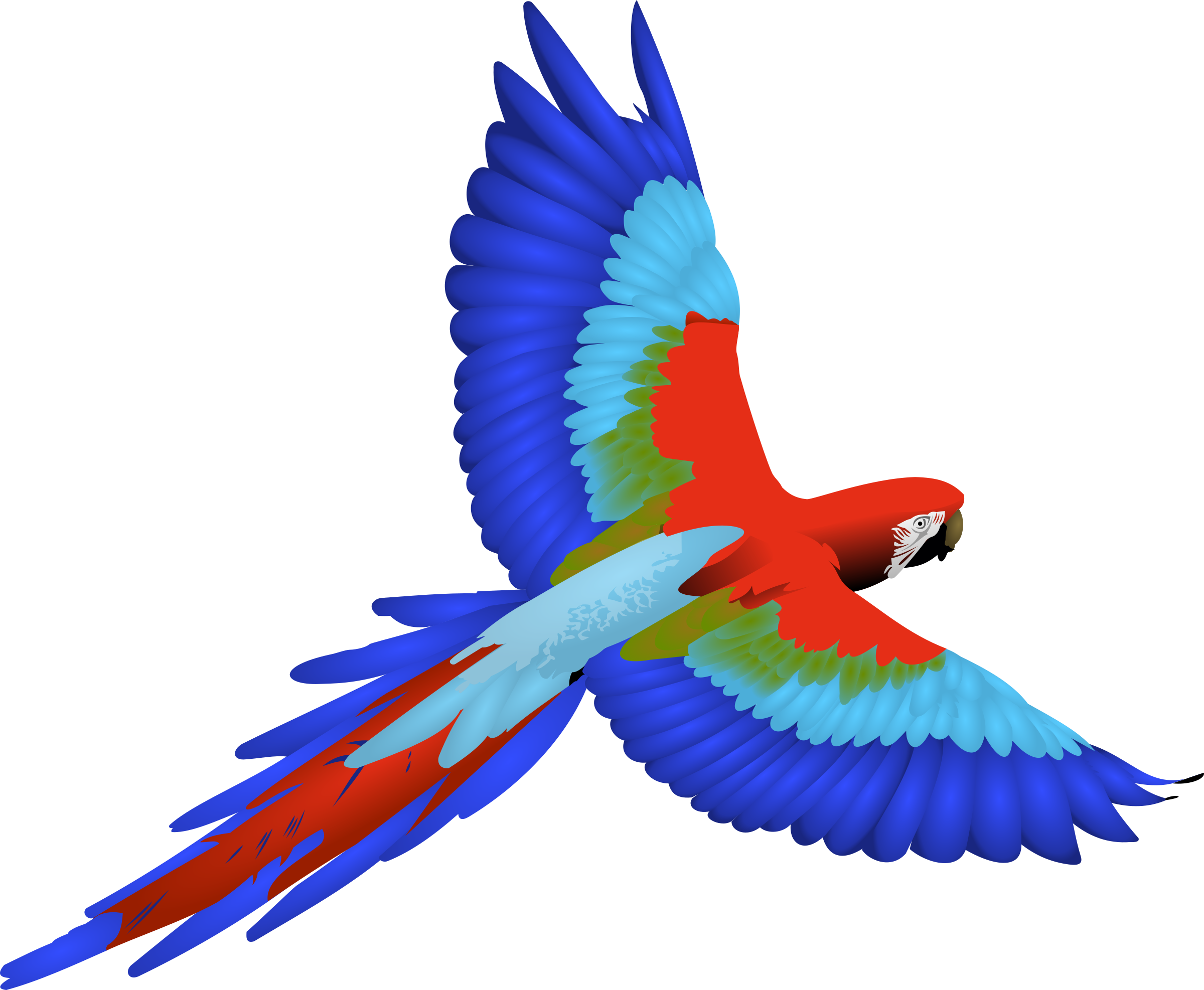 Clipart - Macaw