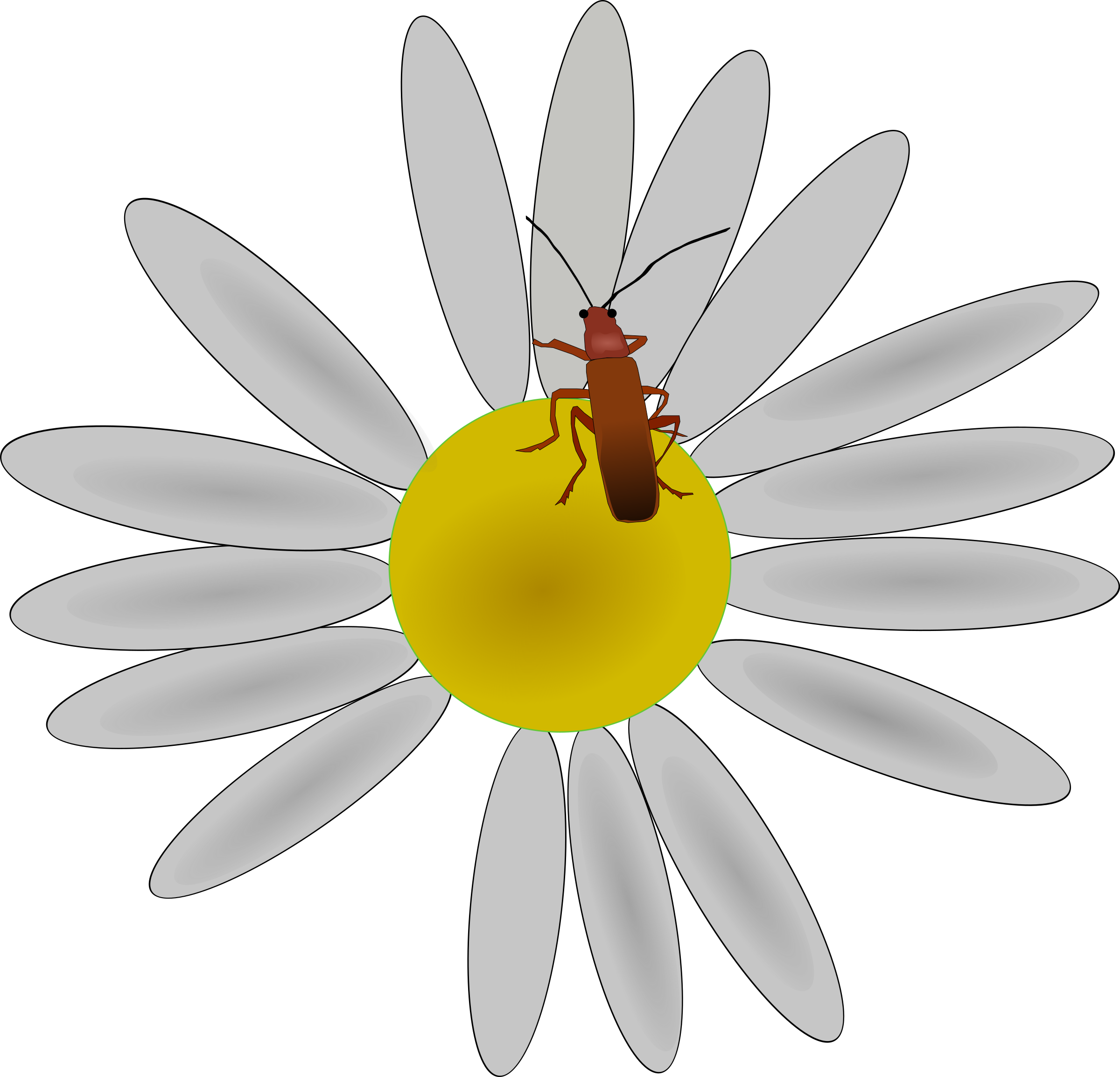 bug on a flower by Machovka