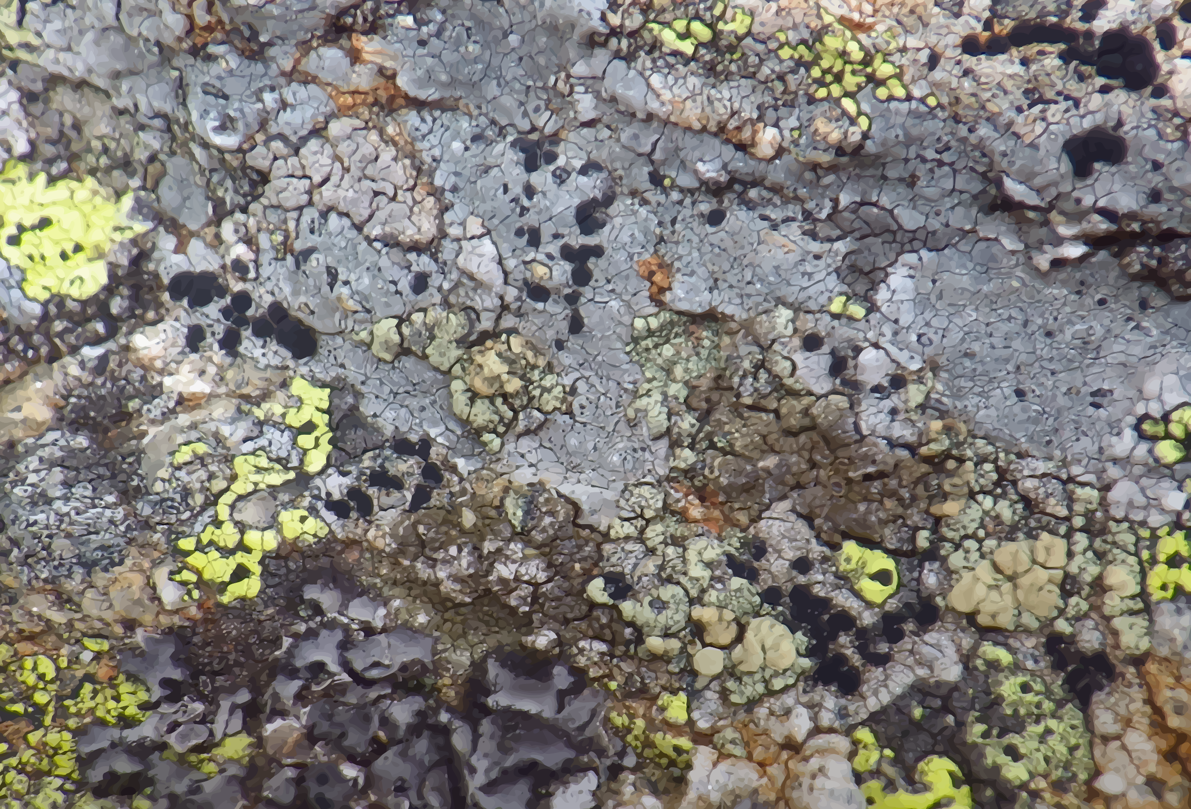 Lichen-covered stone 3 by Firkin