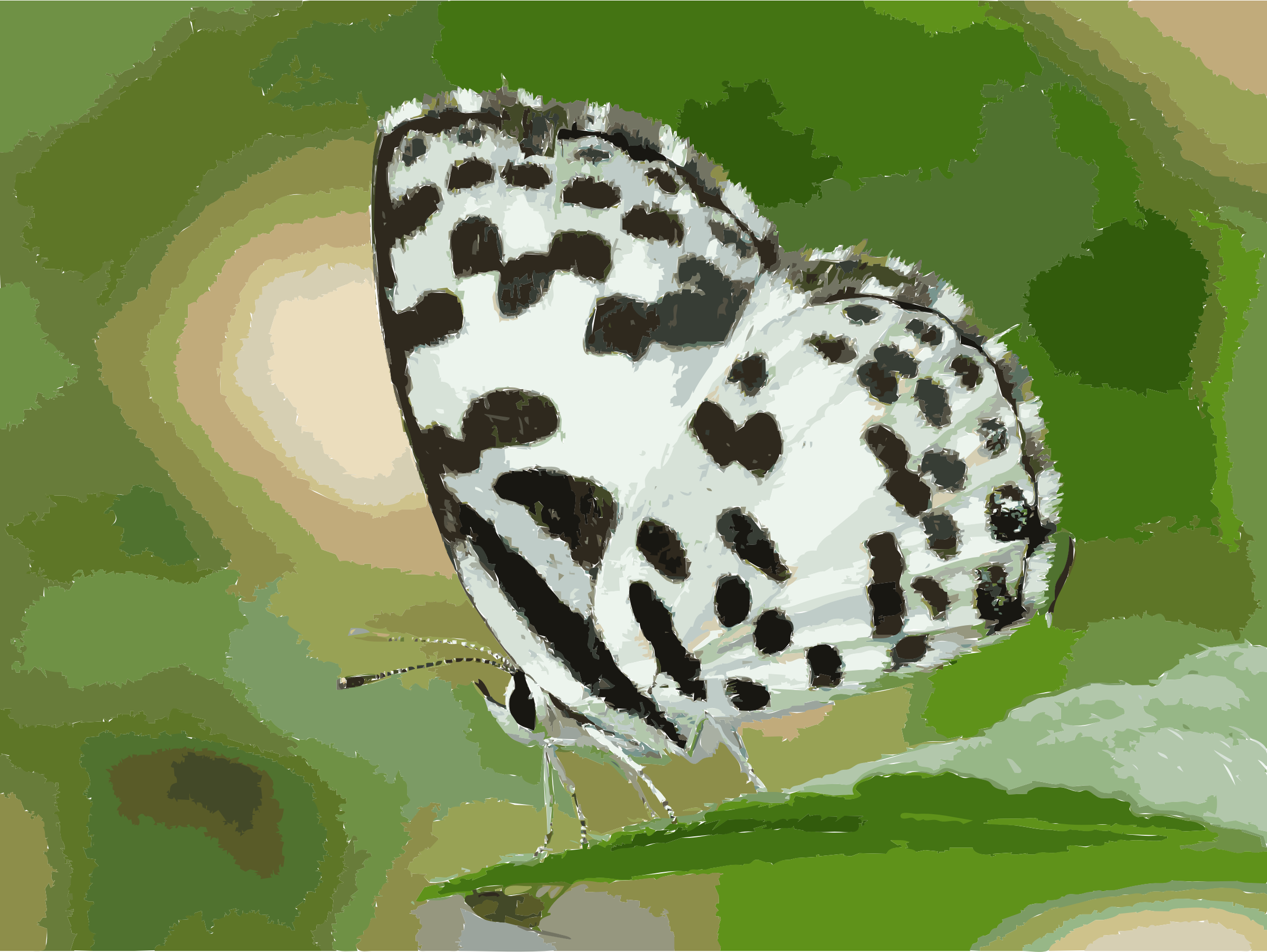Common Pierrot Castalius rosimon by kadavoor by 5m2l1q+47bs4p7ipm8xs