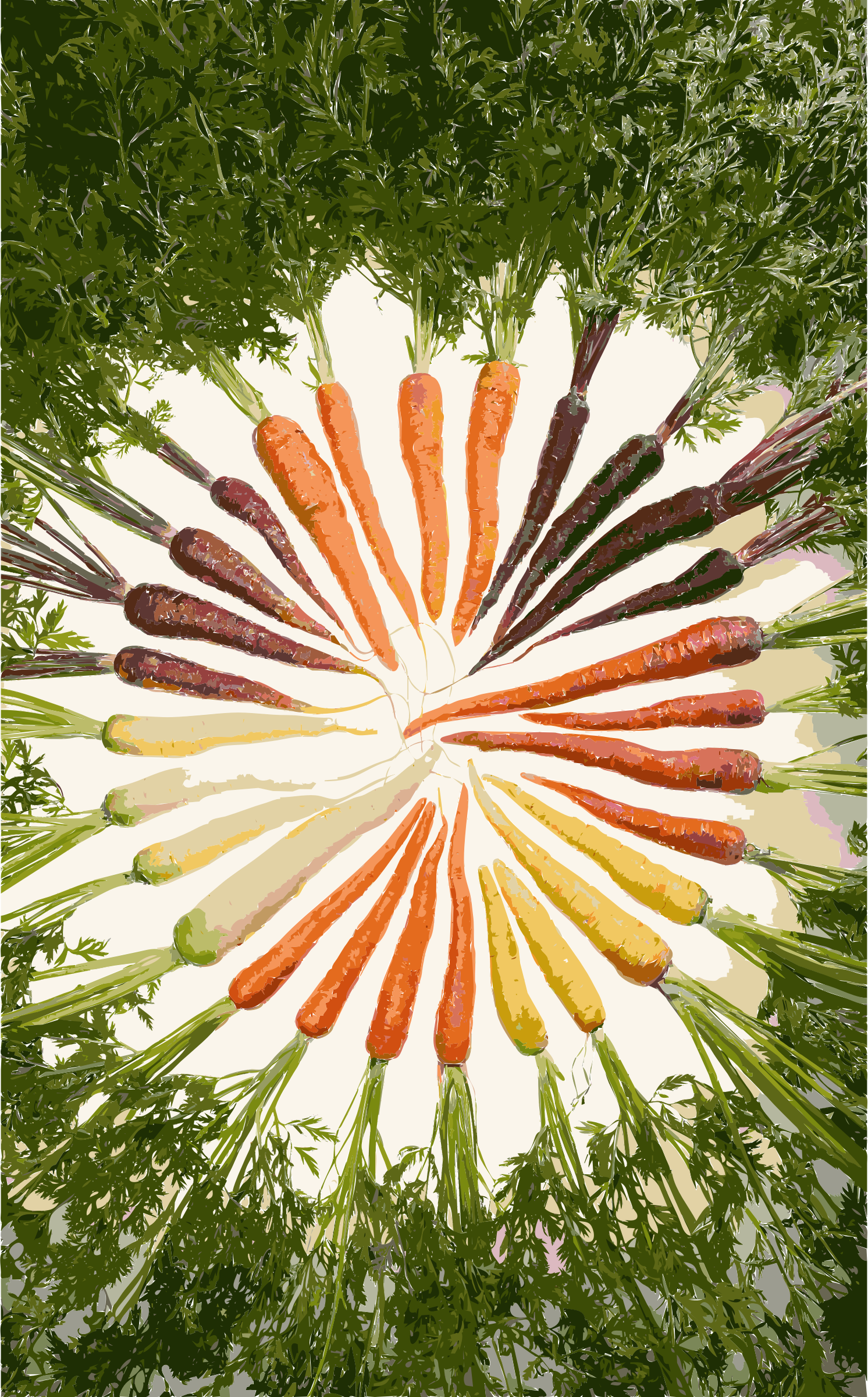 Carrots of many colors by 5n8ag4+endyauppxpaas