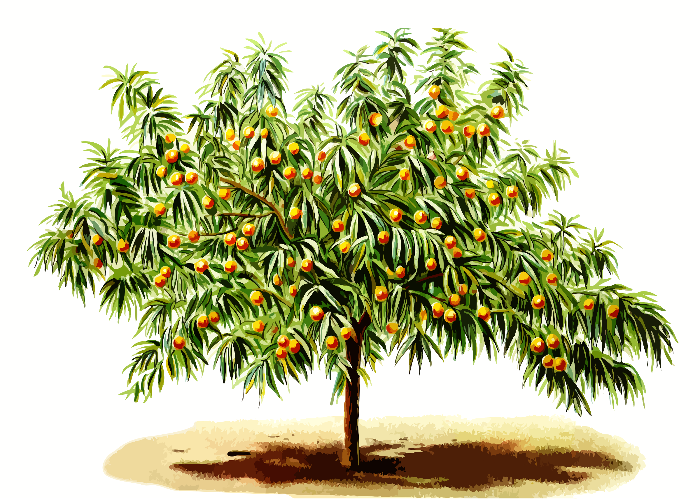 Peach tree by Firkin