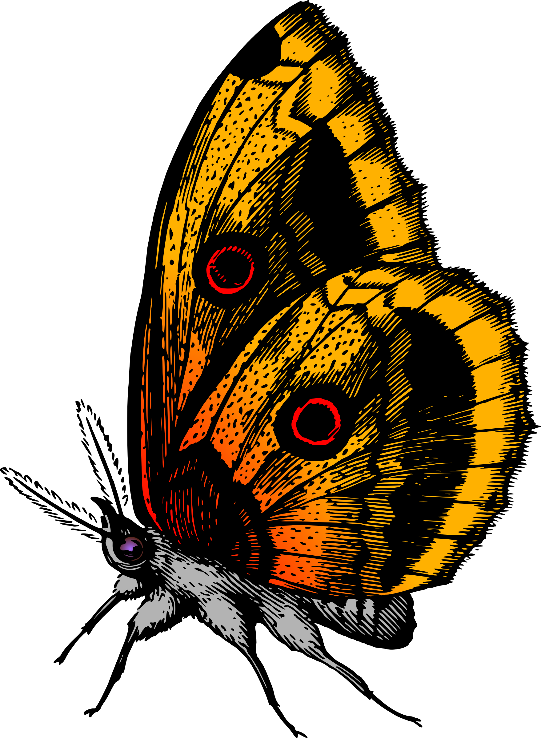 Butterfly 18 (colour) by Firkin