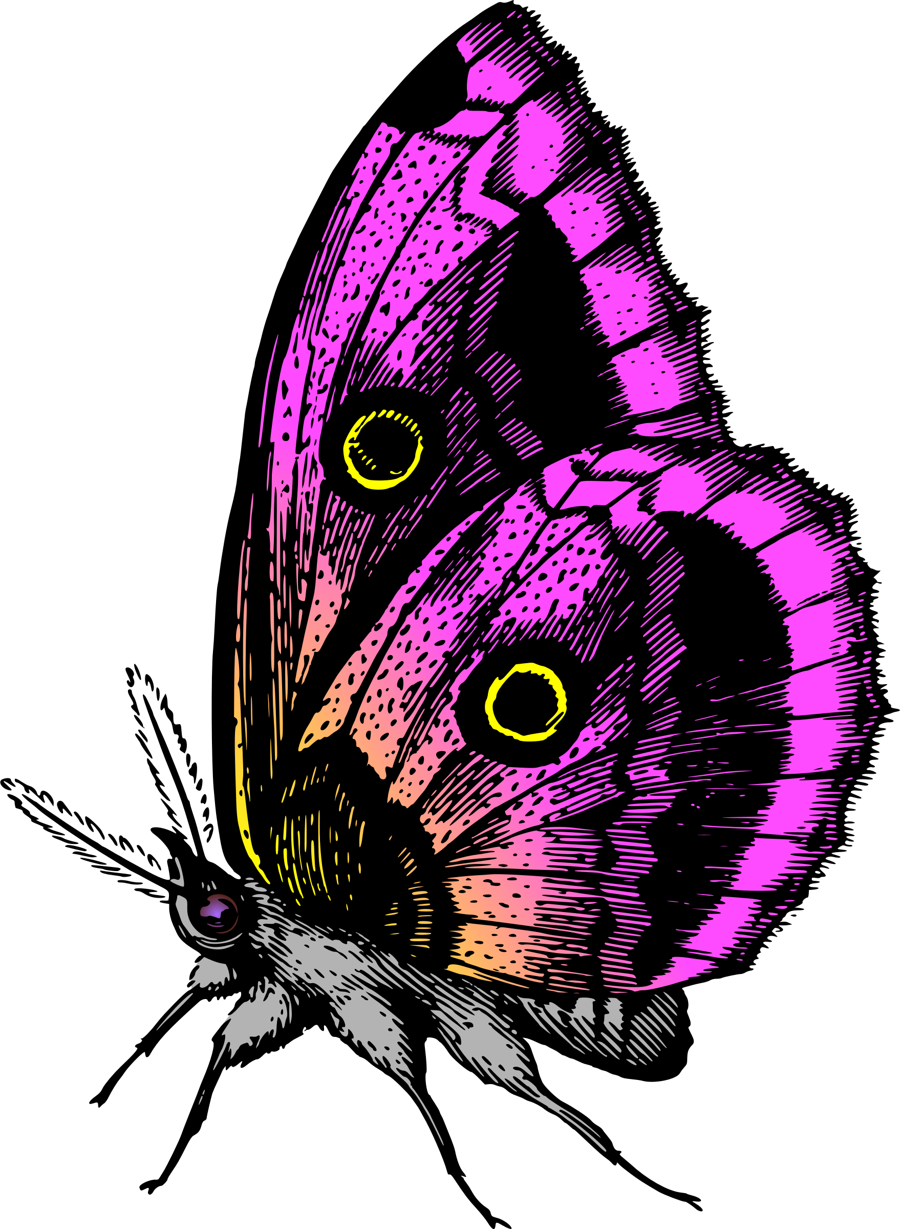 Butterfly 18 (colour3) by Firkin
