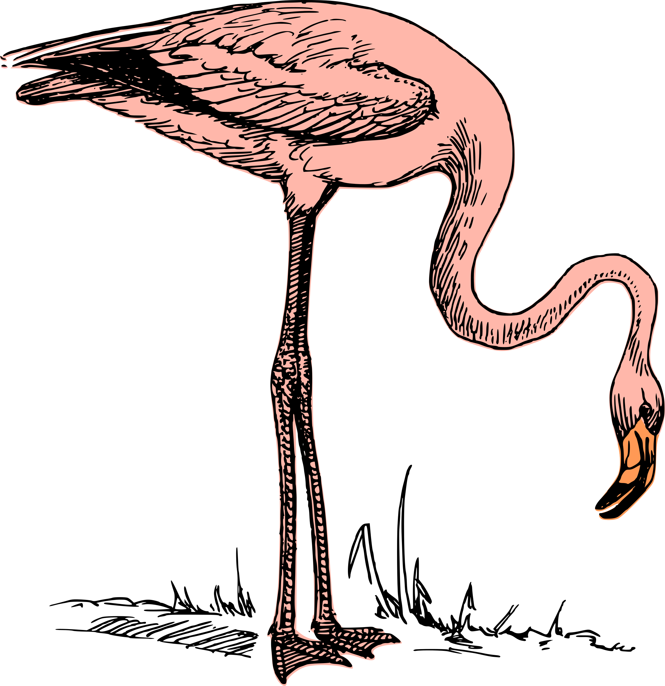 Pink flamingo by anarres