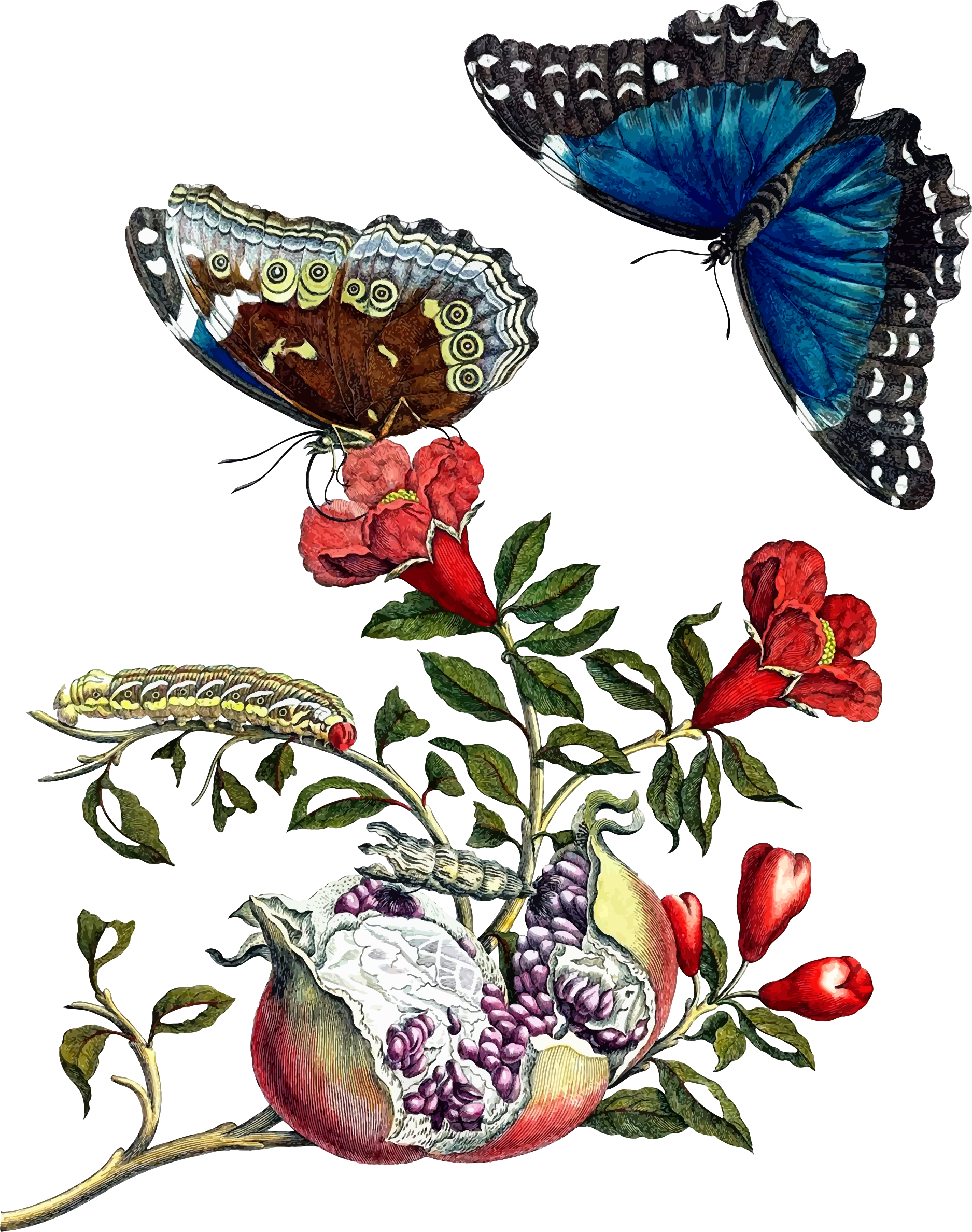 Butterflies on pomegranate by Firkin