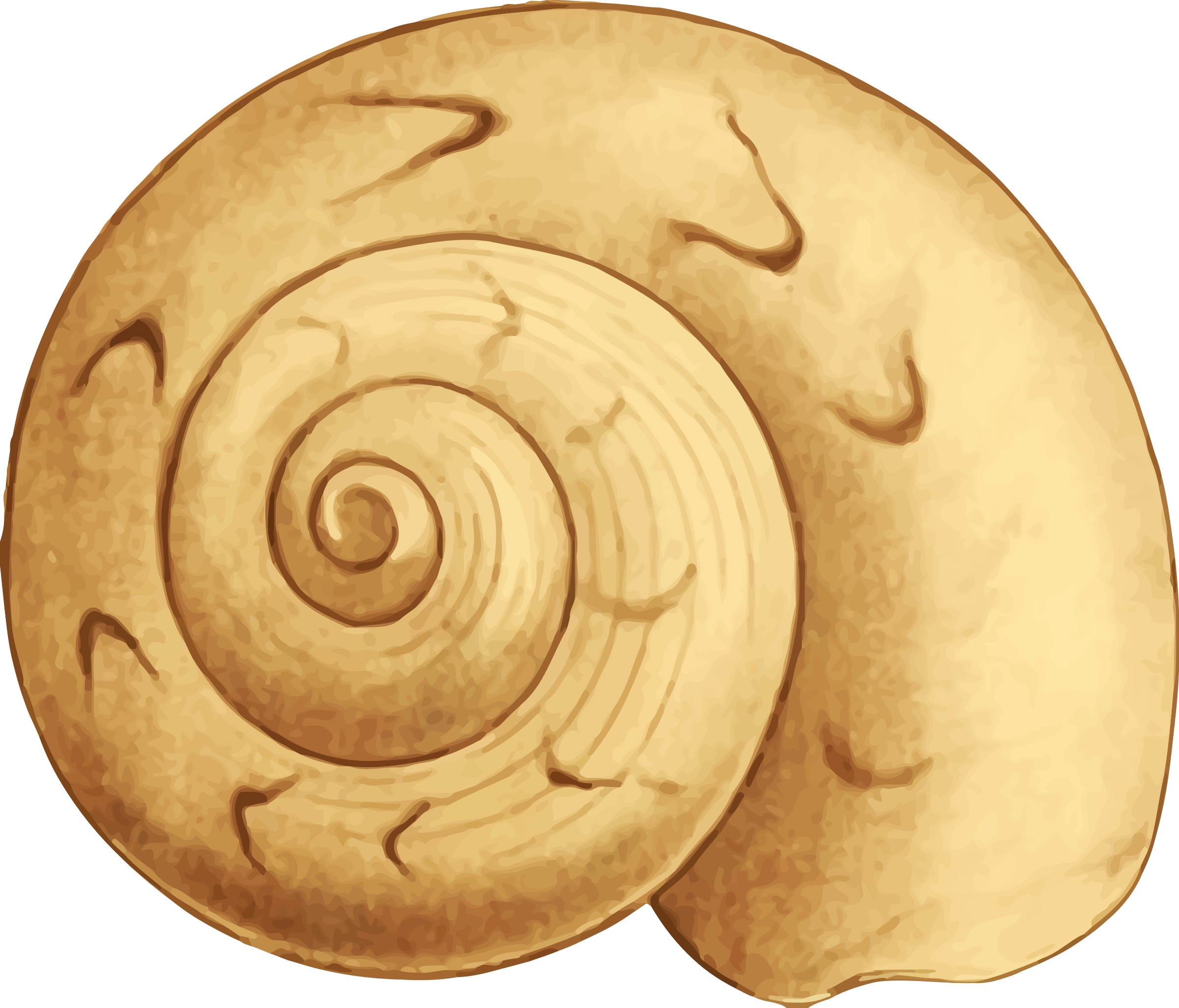 clipart   sea shell 35