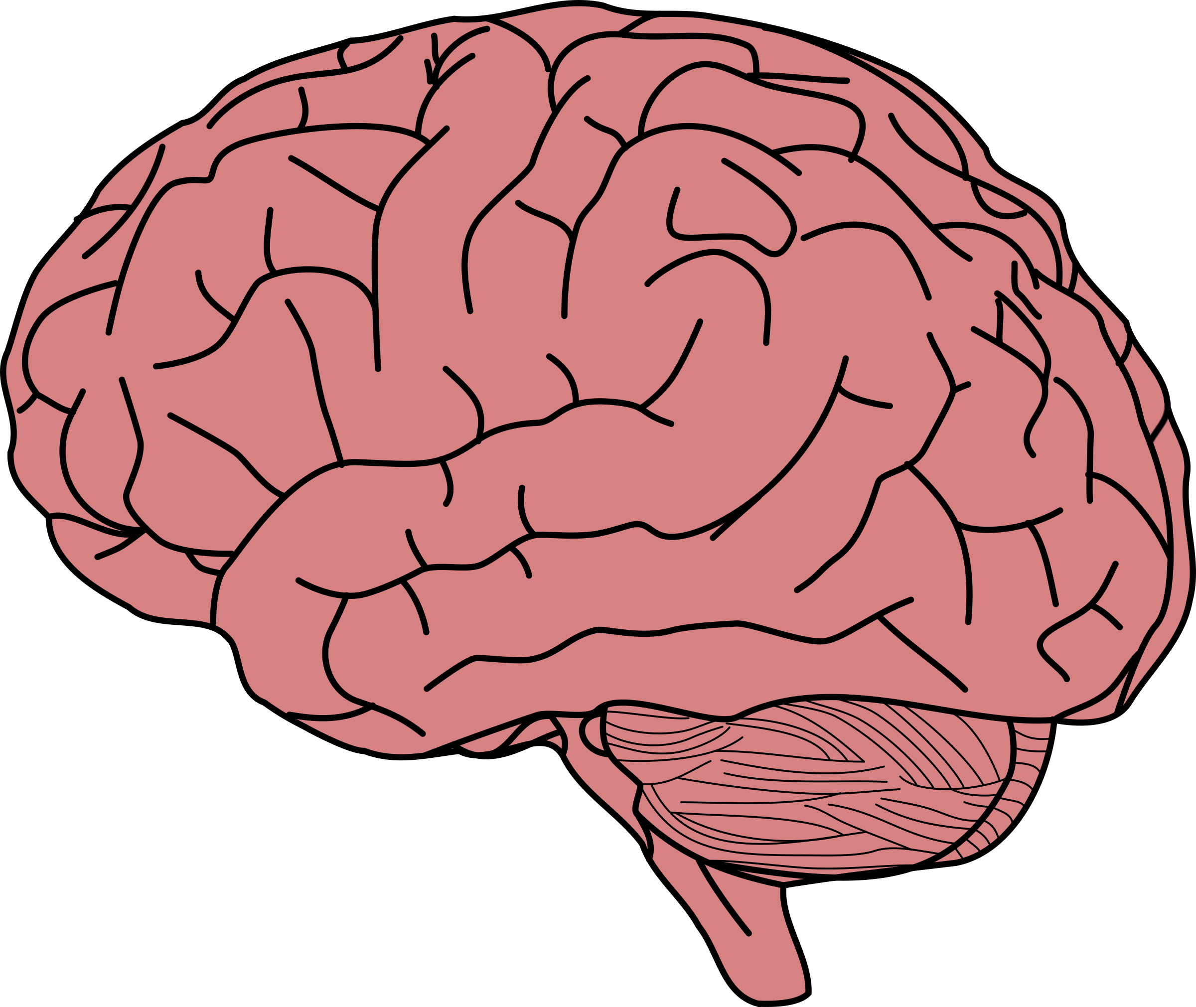 human brain Free human brain papers, essays, and research papers.