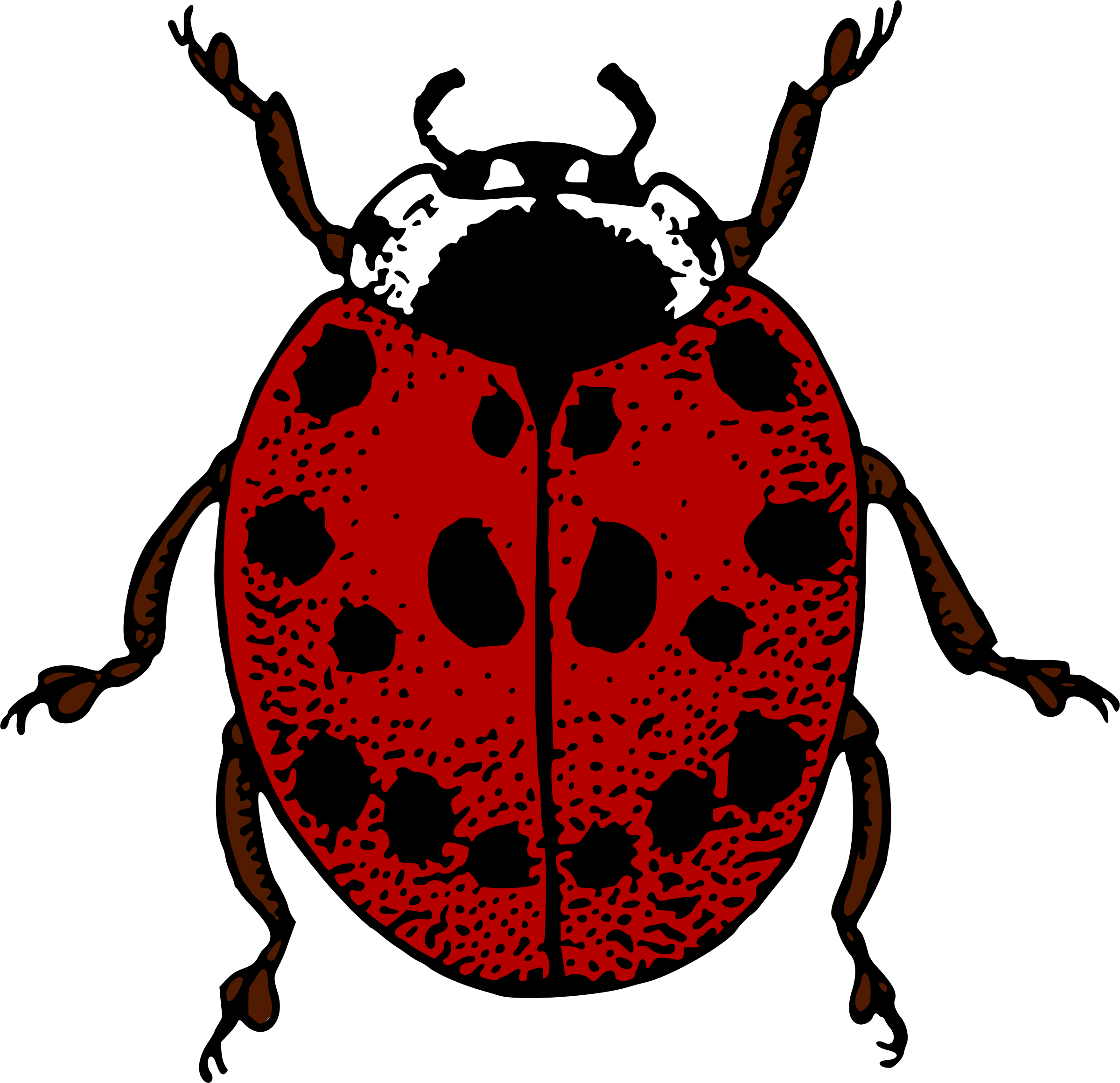 Ladybird (colour) by Firkin