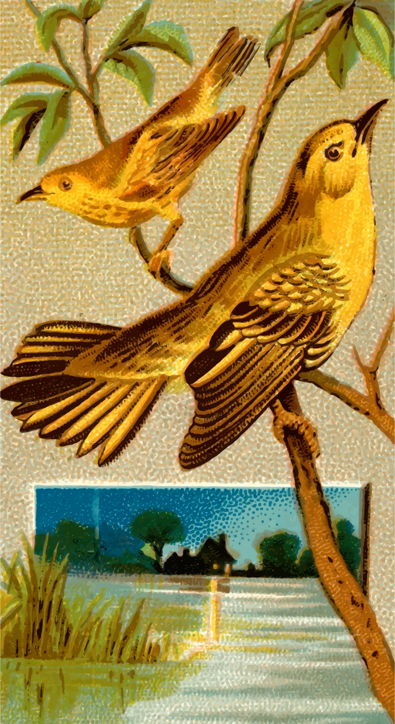 Cigarette card - Wood warbler by Firkin