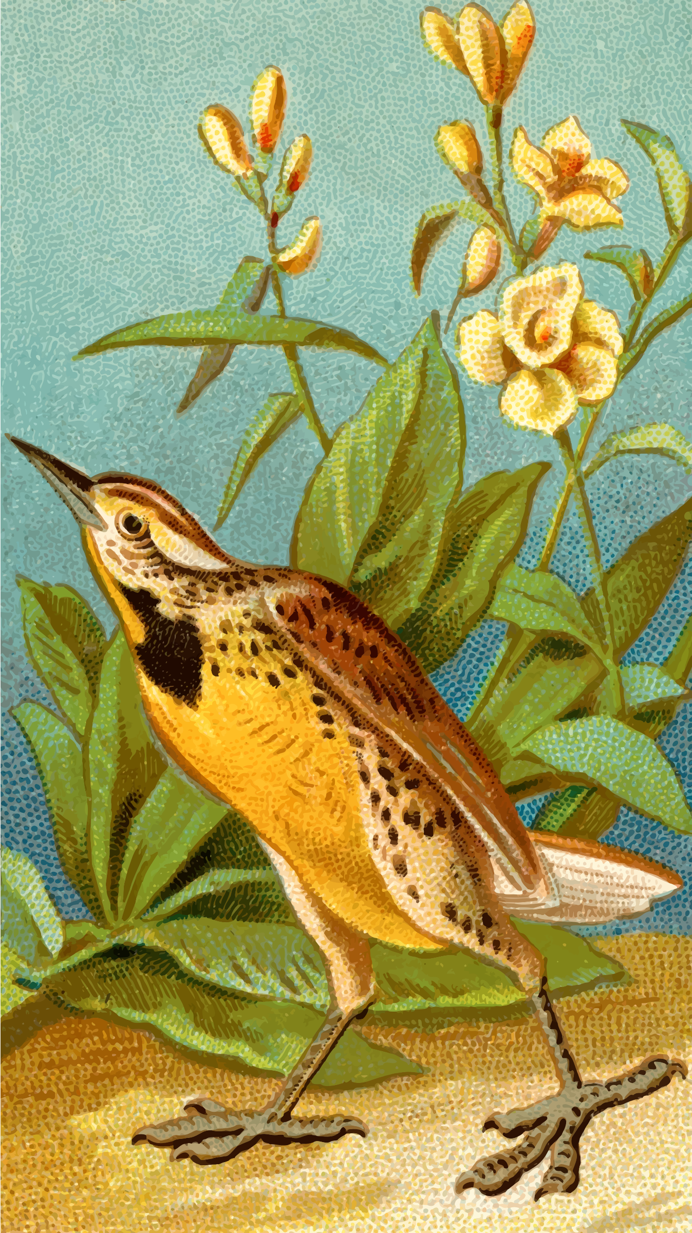 Cigarette card - Meadow lark by Firkin