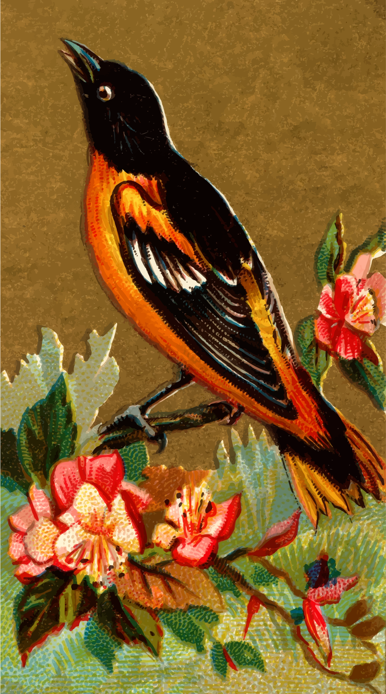 Cigarete card - Baltimore Oriole by Firkin