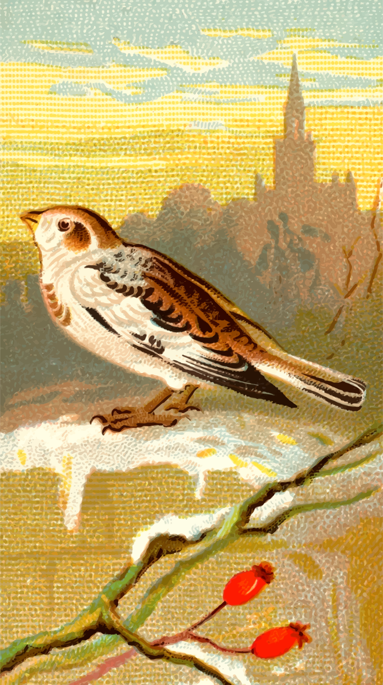Cigarette card - Snow Bunting by Firkin
