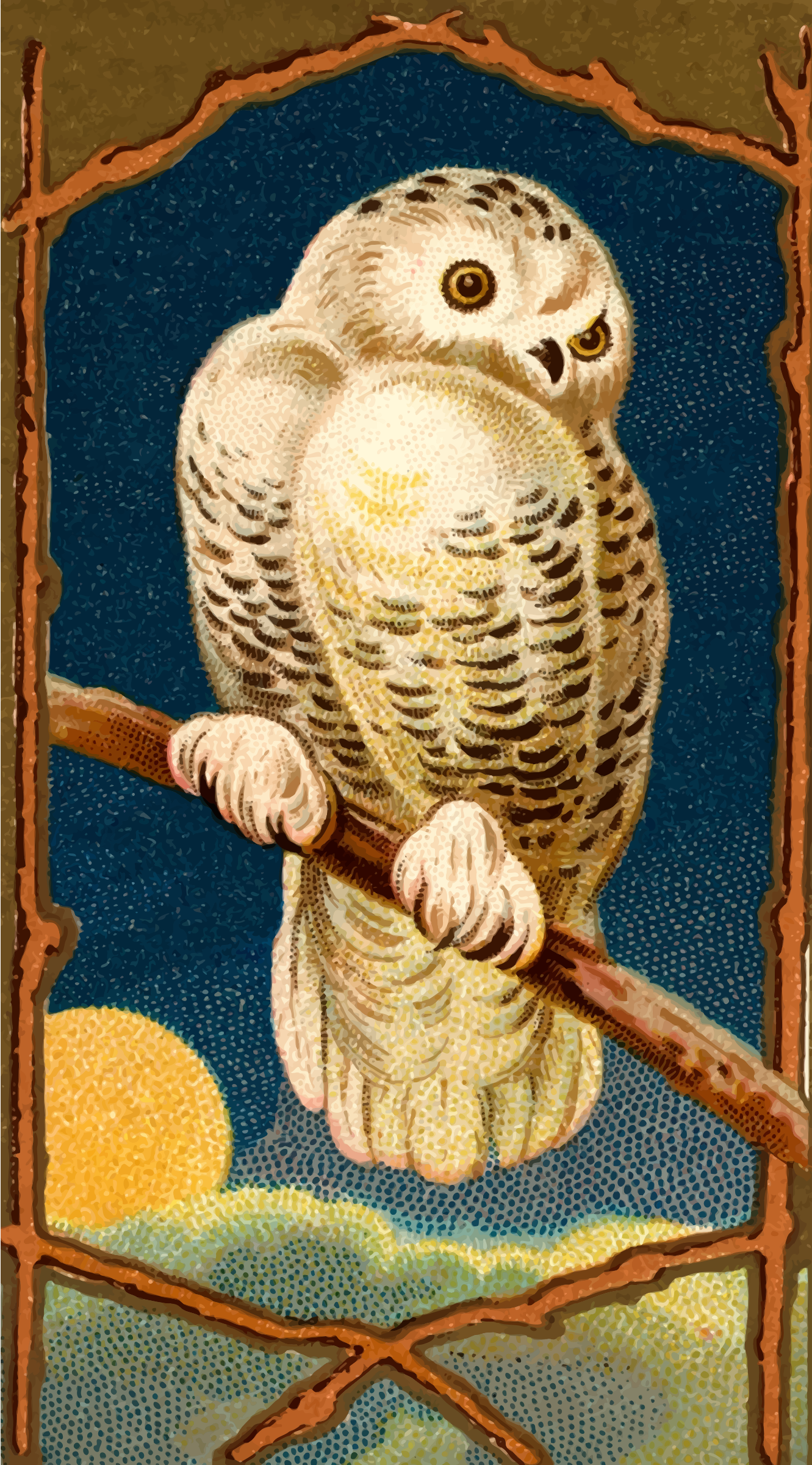 Cigarette card - Snowy Owl by Firkin