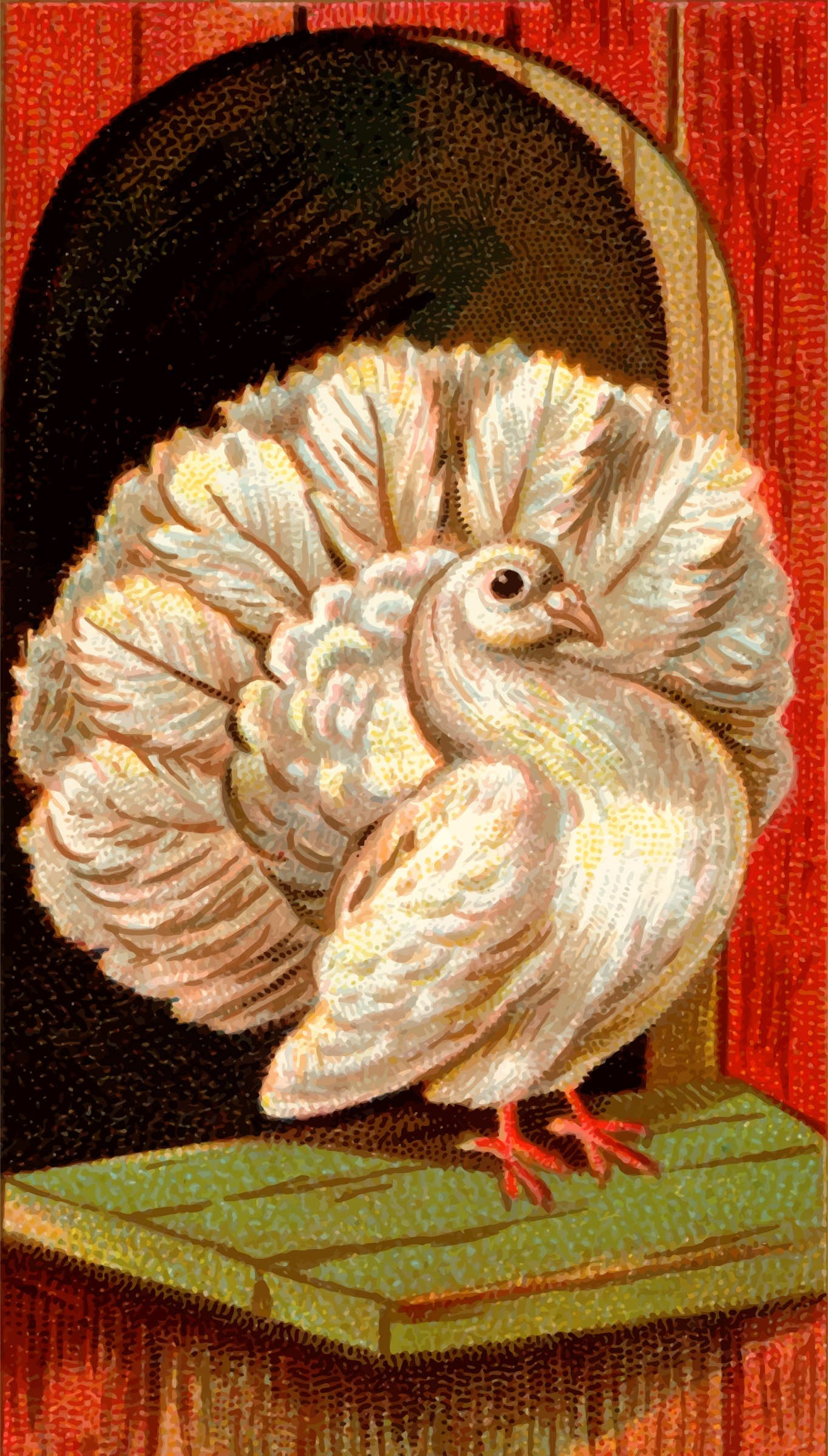 Cigarette card - Fantail Pigeon by Firkin