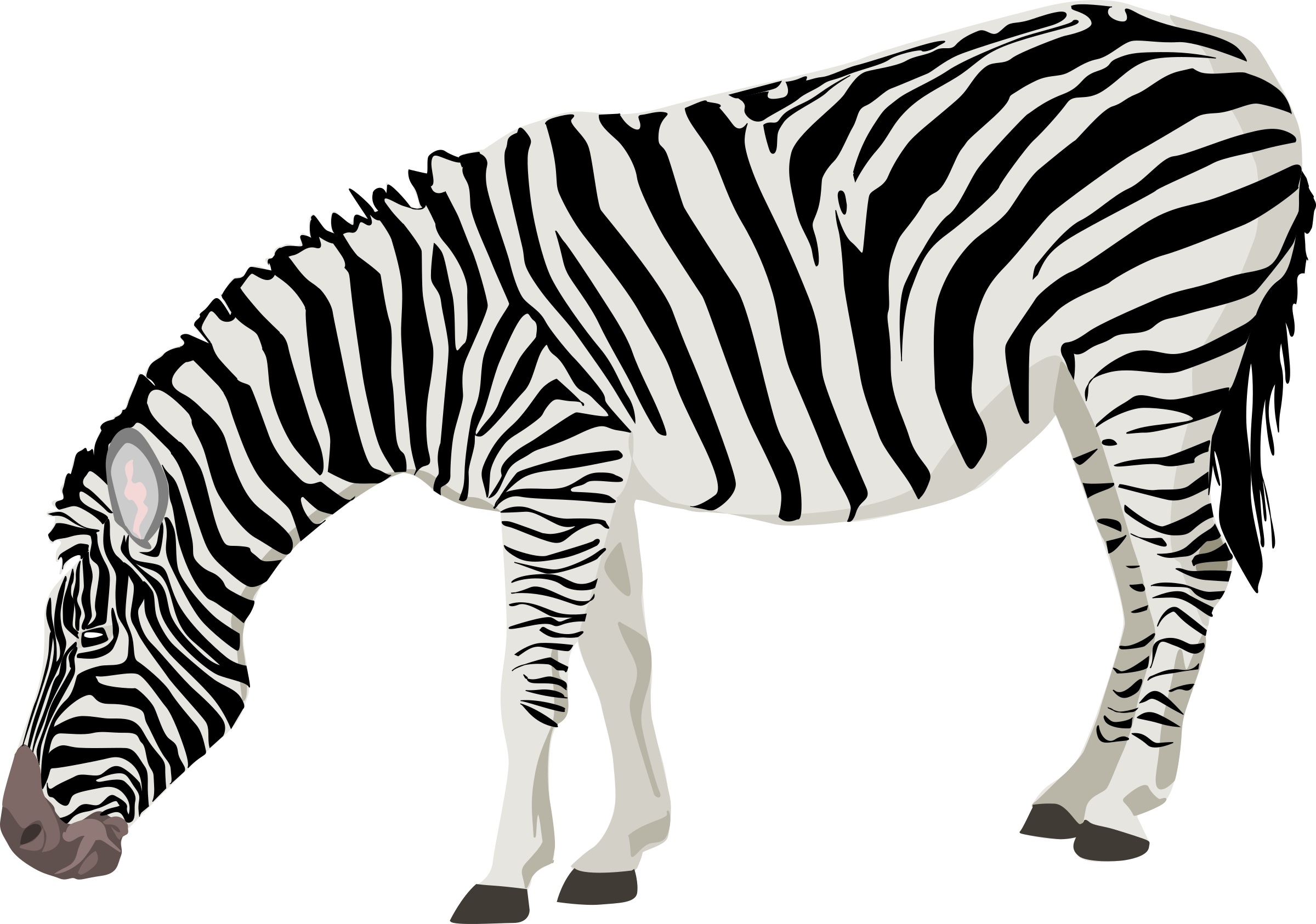 zebra by ha1flosse