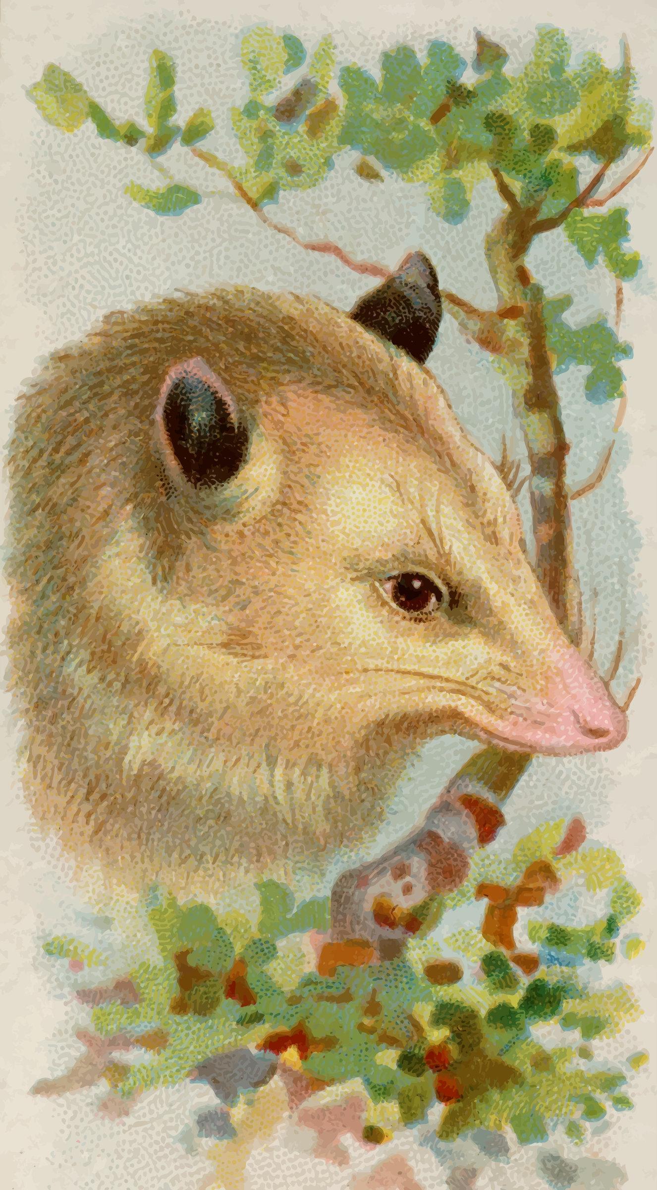 Cigarette card - Opossum by Firkin