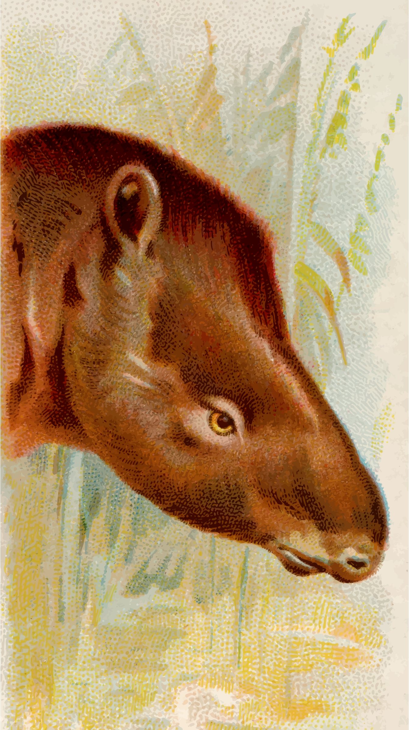 Cigarette card - Tapir by Firkin