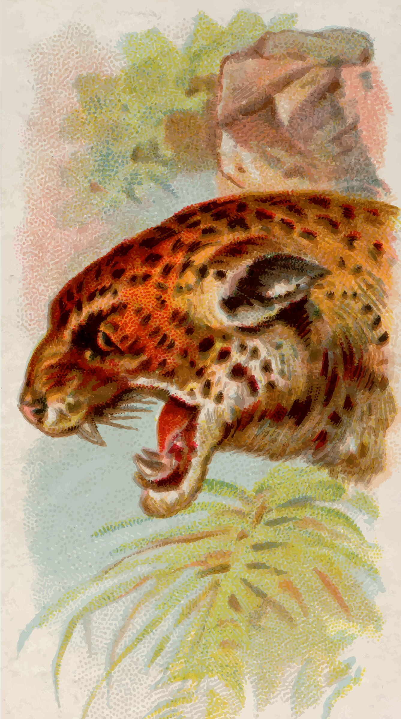 Cigarette card - Jaguar by Firkin