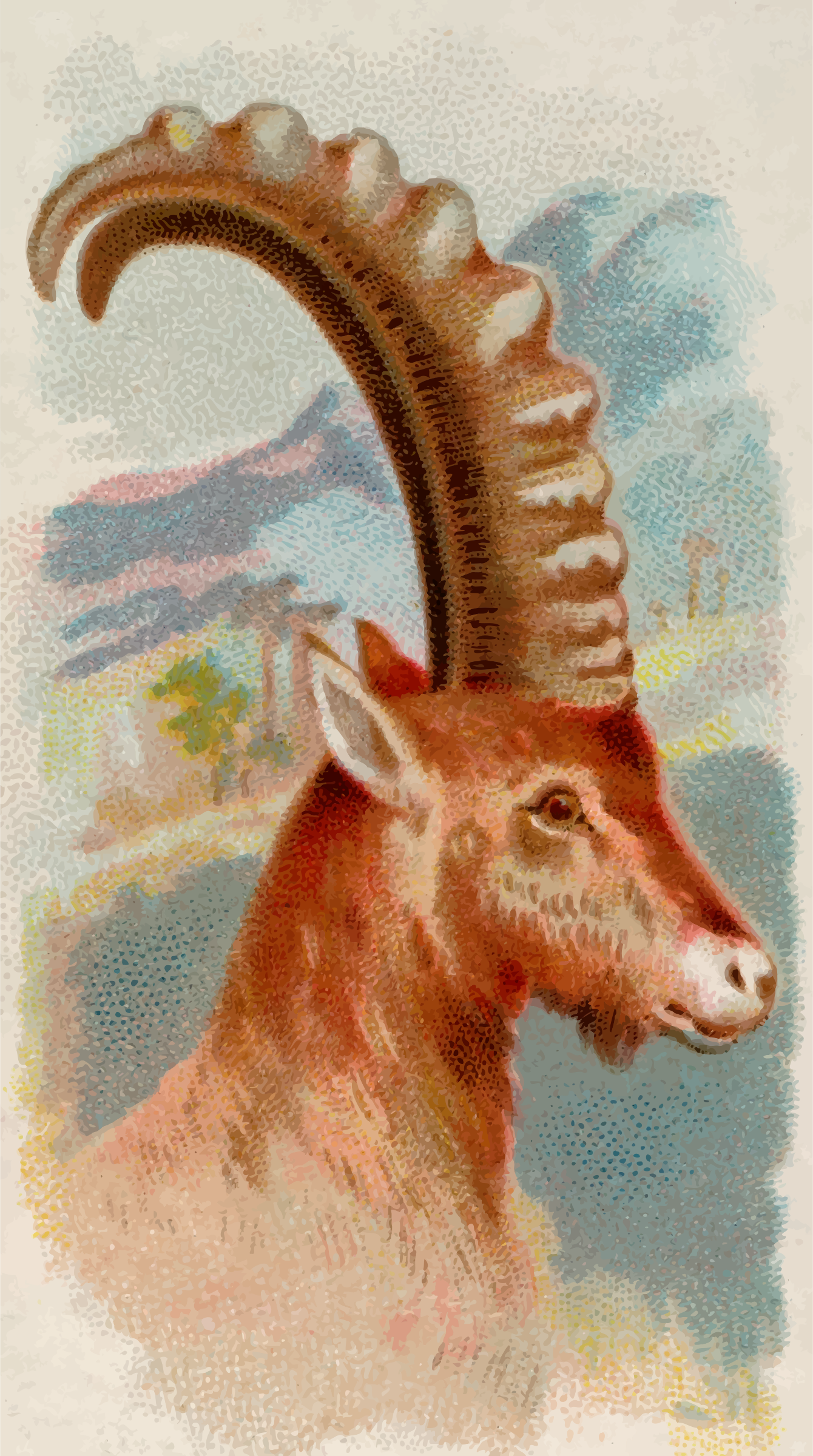 Cigarette card - Ibex by Firkin