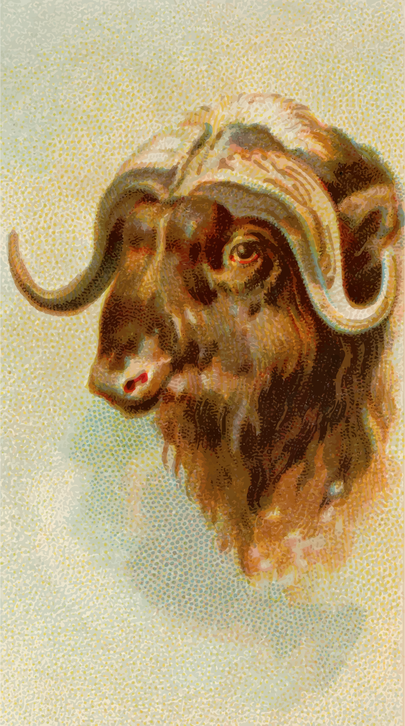 Cigarette card - Musk ox by Firkin