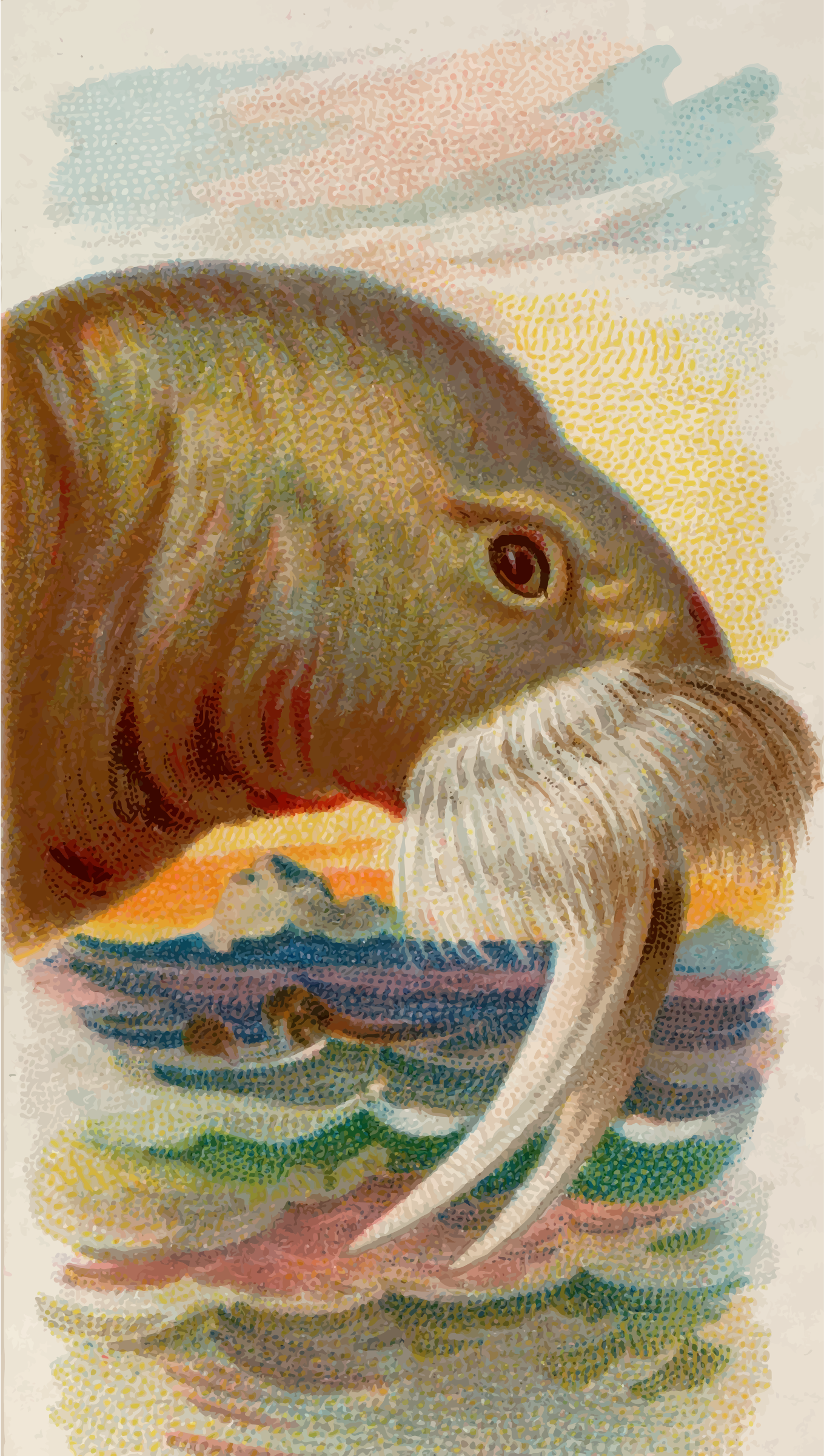Cigarette card - Walrus by Firkin