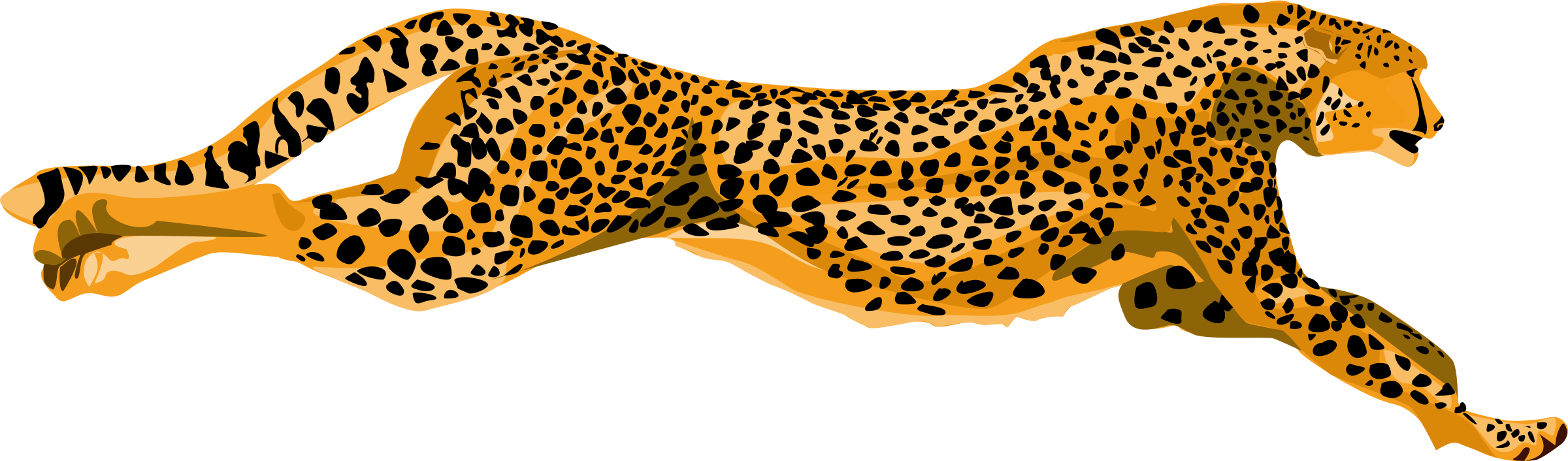 leopard_cheetah by ha1flosse