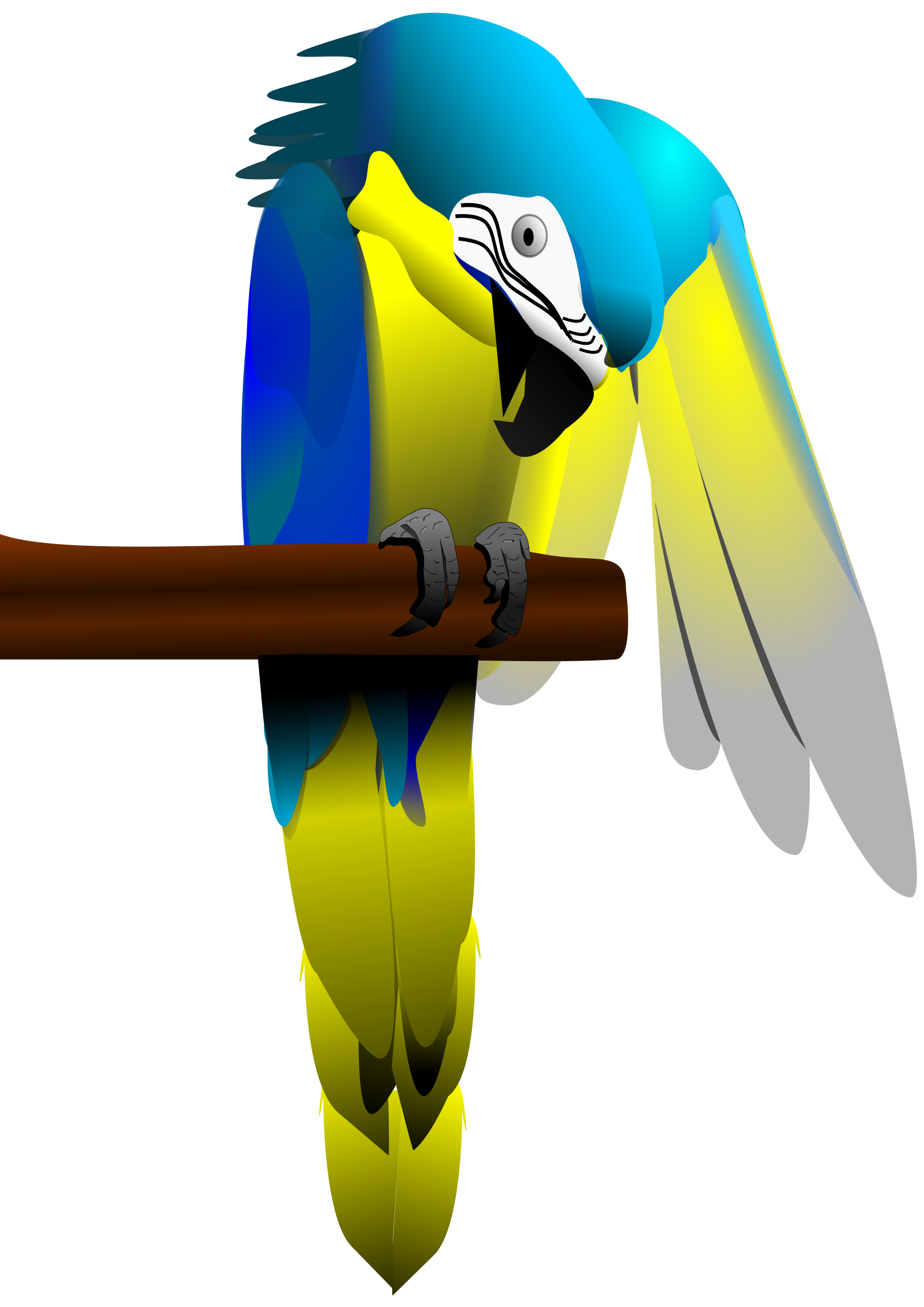 Blue and Yellow Macaw Parrot by adw3163