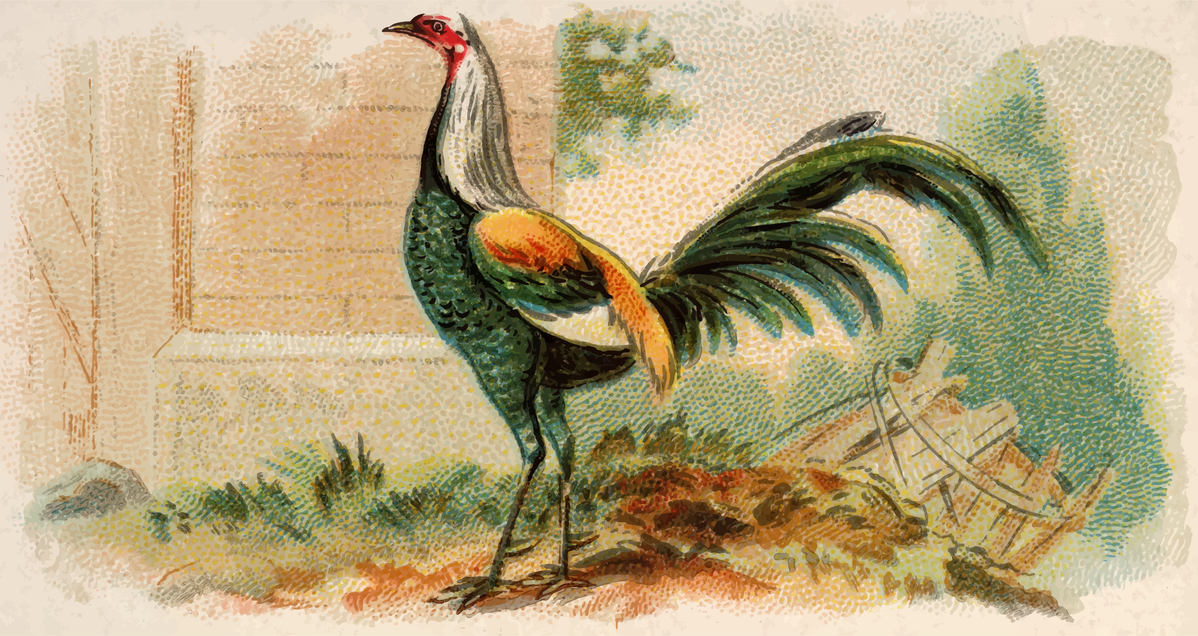 Cigarette card - Duckwing Game Fowl by Firkin